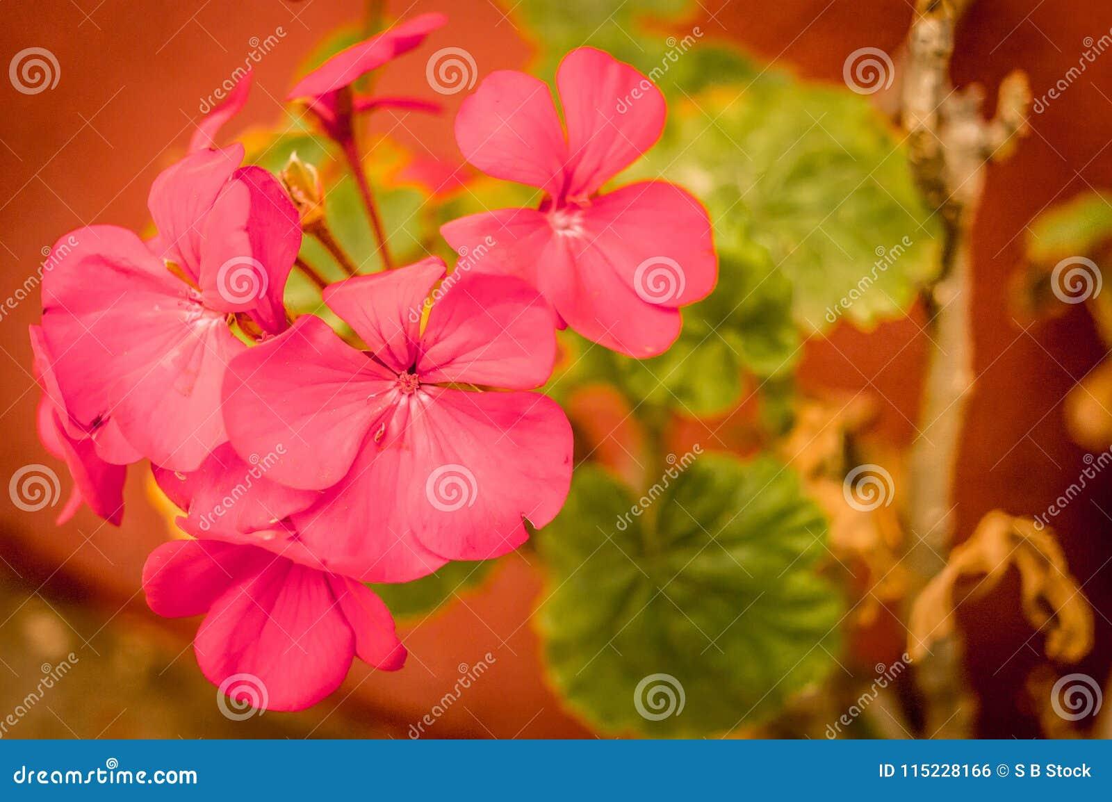 Blommagreen låter vara red