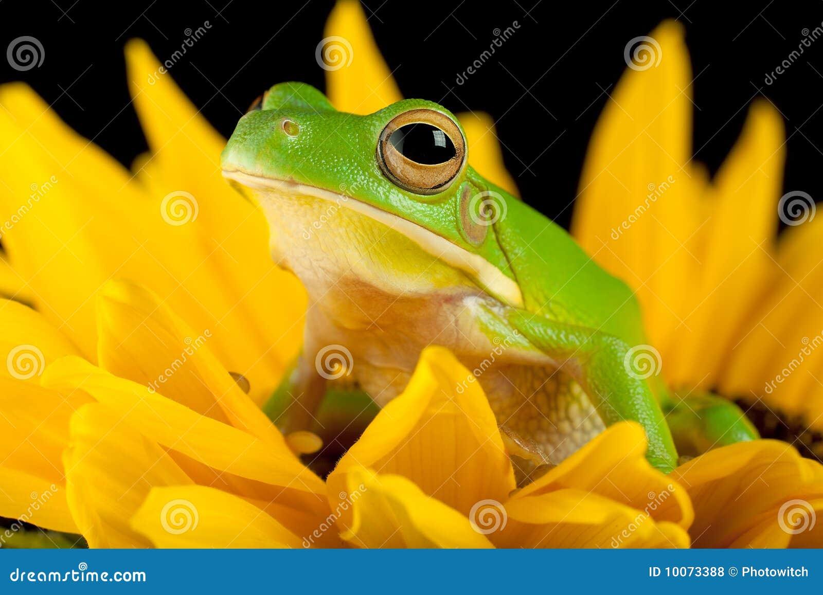 Blommagrodatree