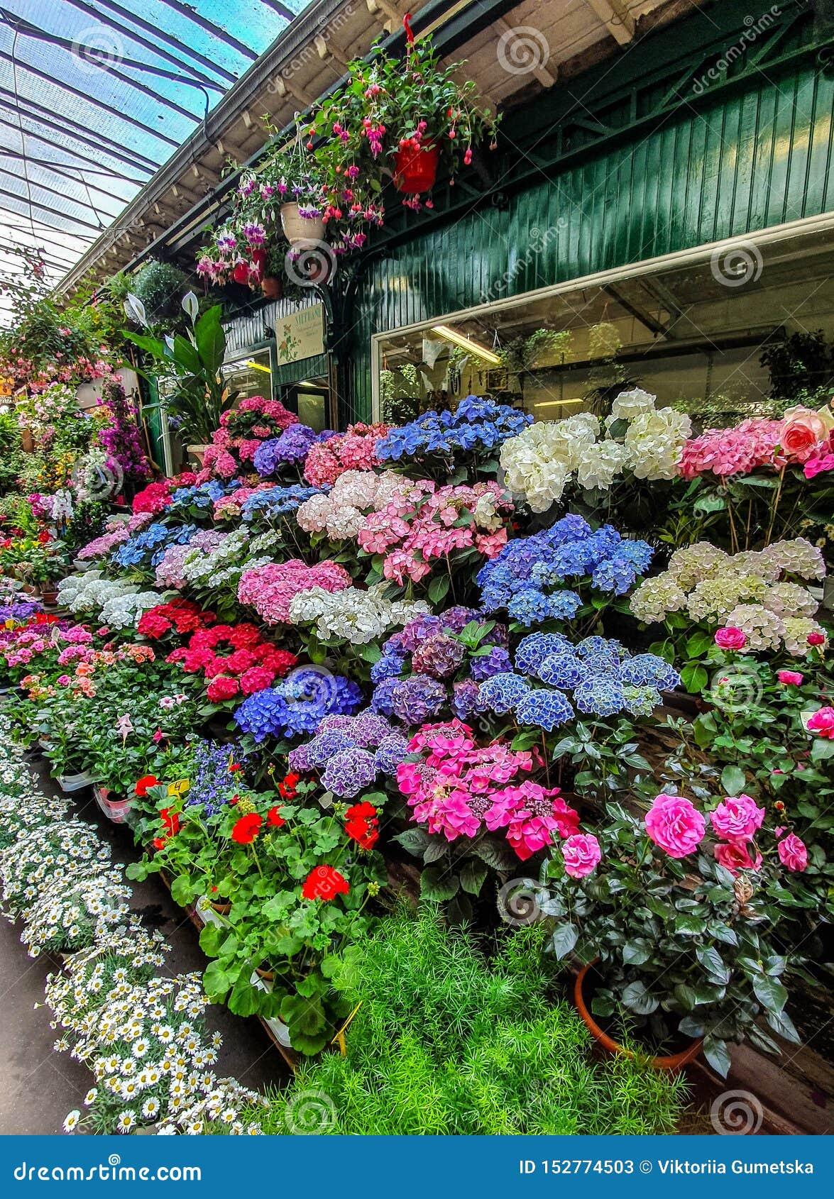 Blommamarknaden i Paris lokaliserade på Ilen de la Citera, mellan det Notre-Dame domkyrka- och Sainte-Chapelle kapellet