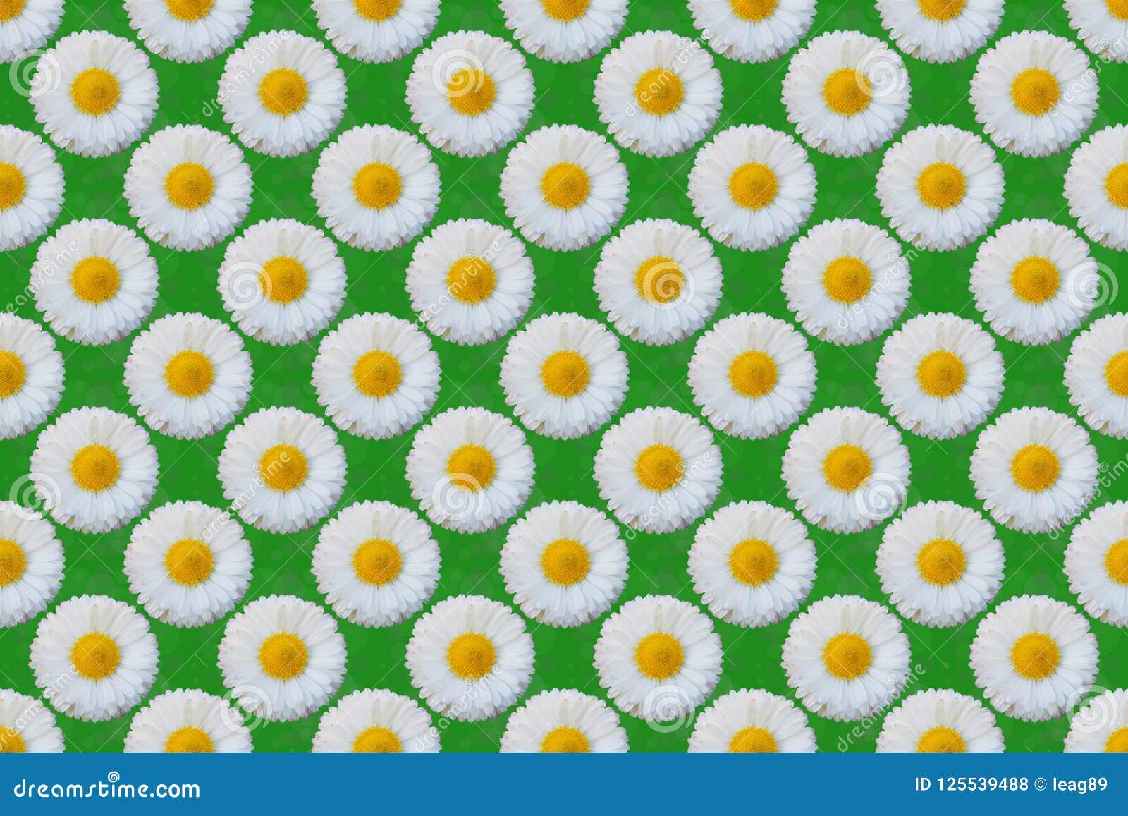 Blommamodell för vit tusensköna
