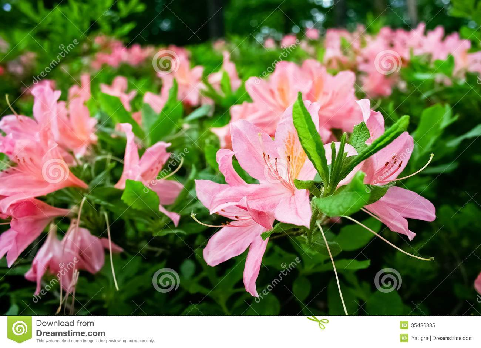 blommor och buskar