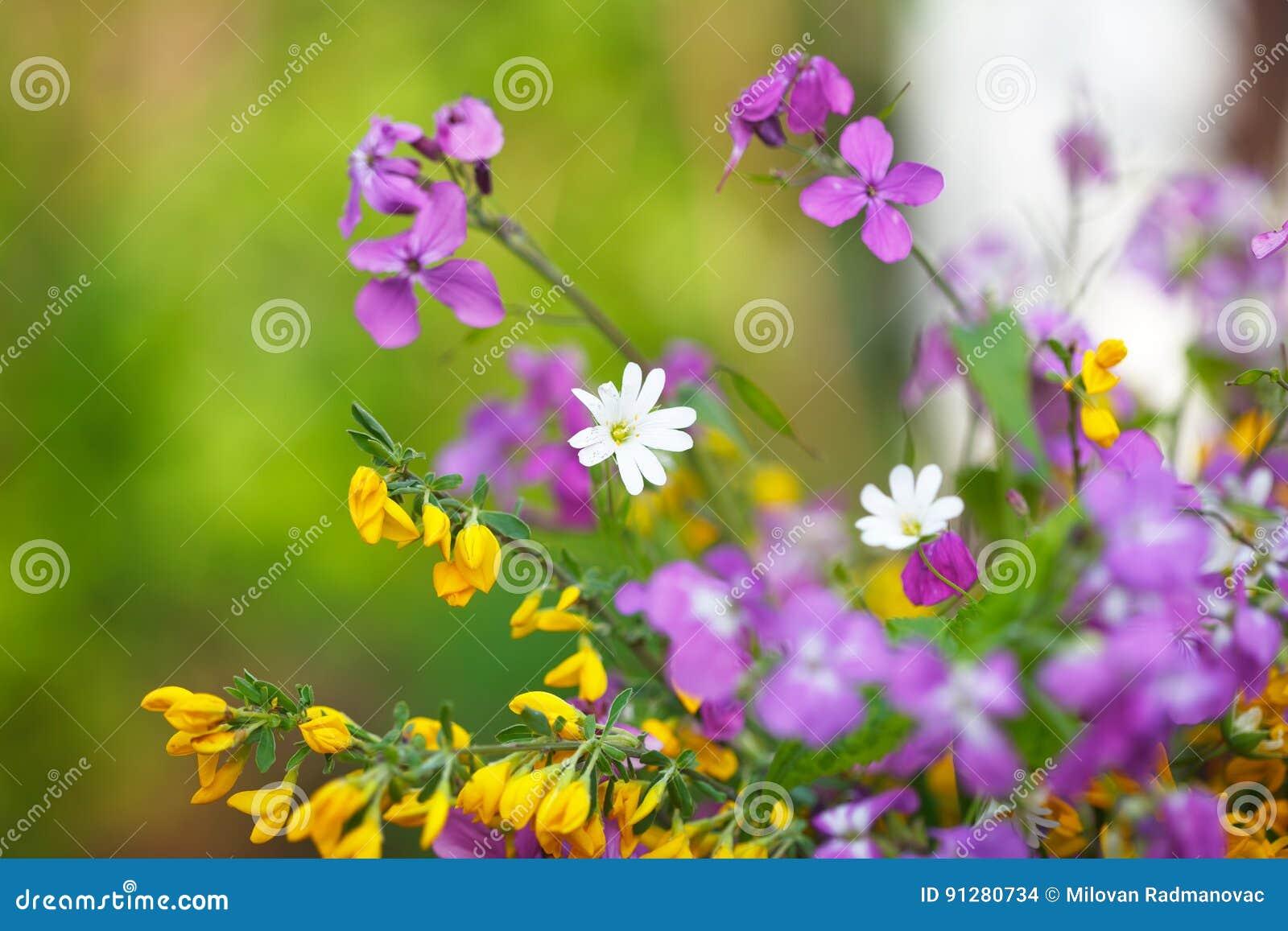 Blommande lösa blommor på ängen