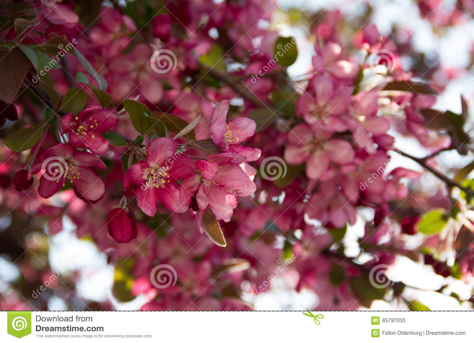 blommande träd bilder