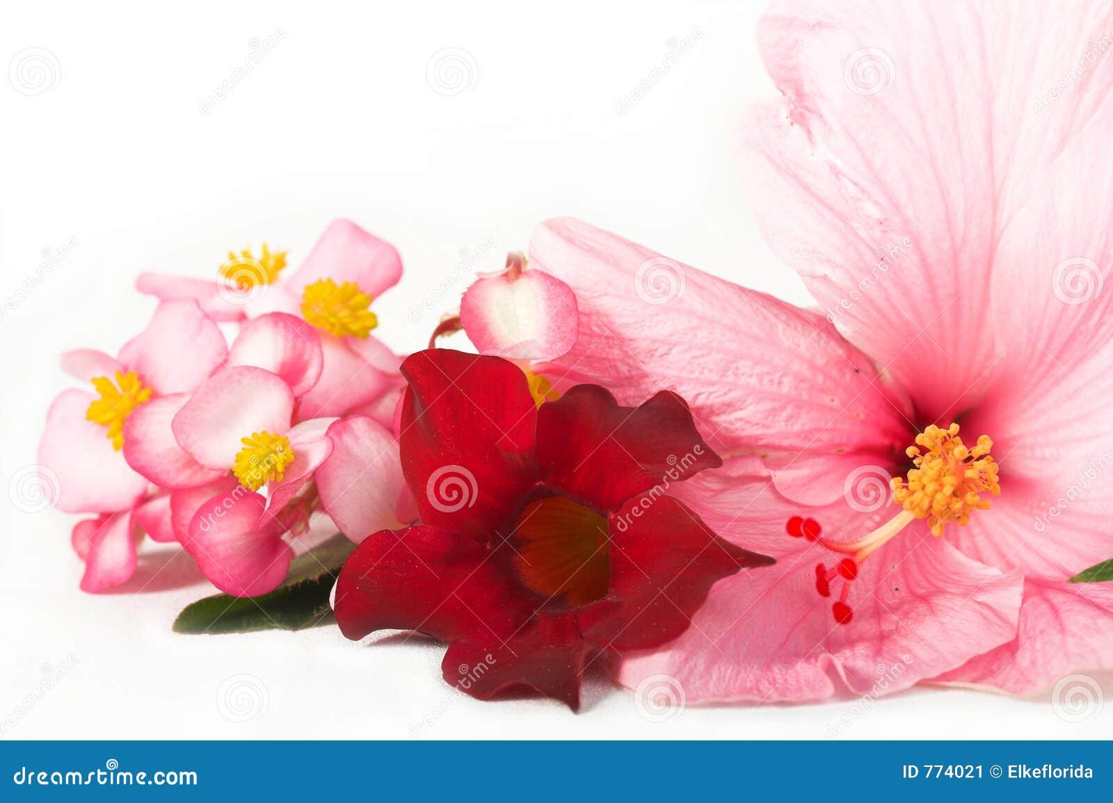 Blommapink