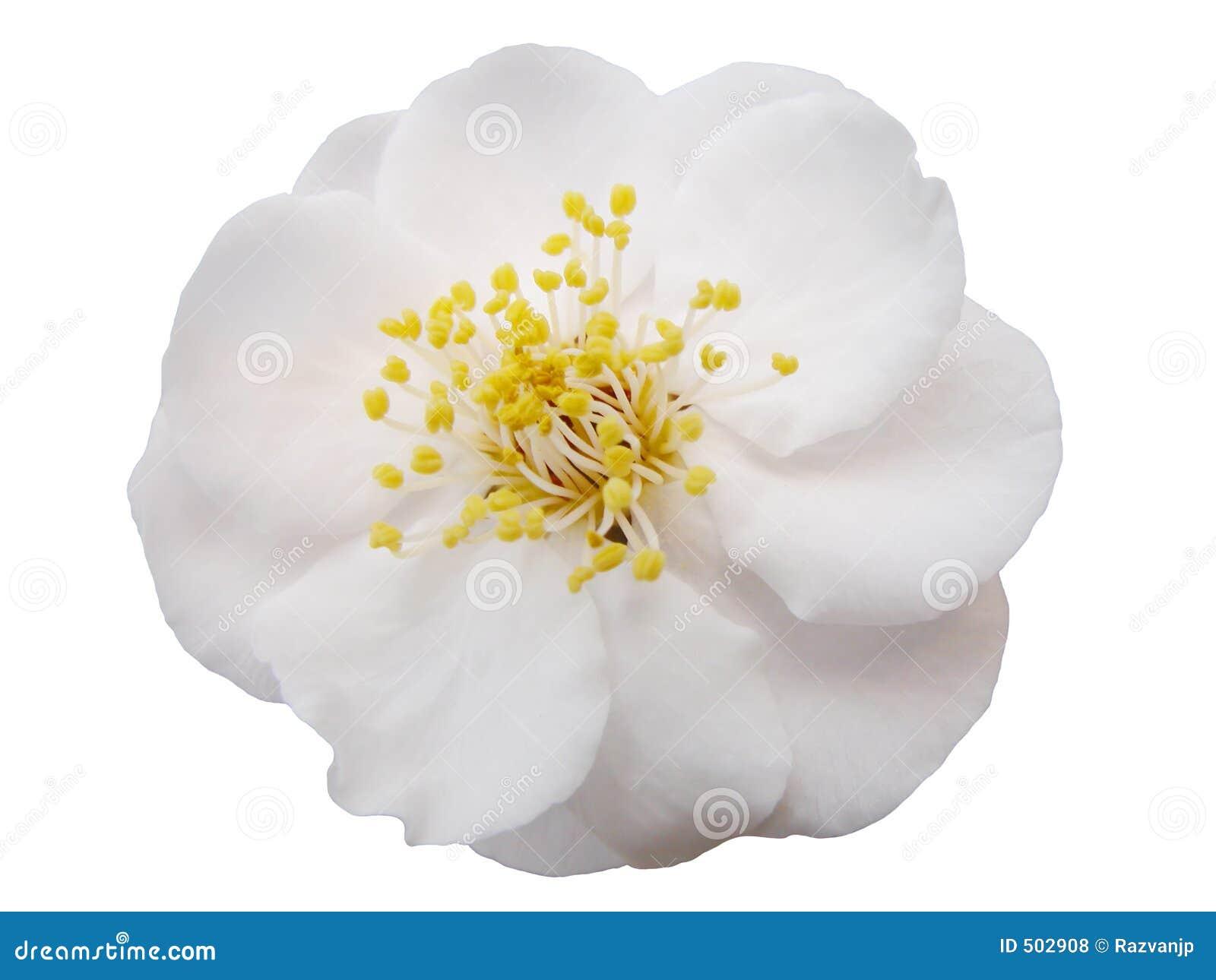 Blommaplommon