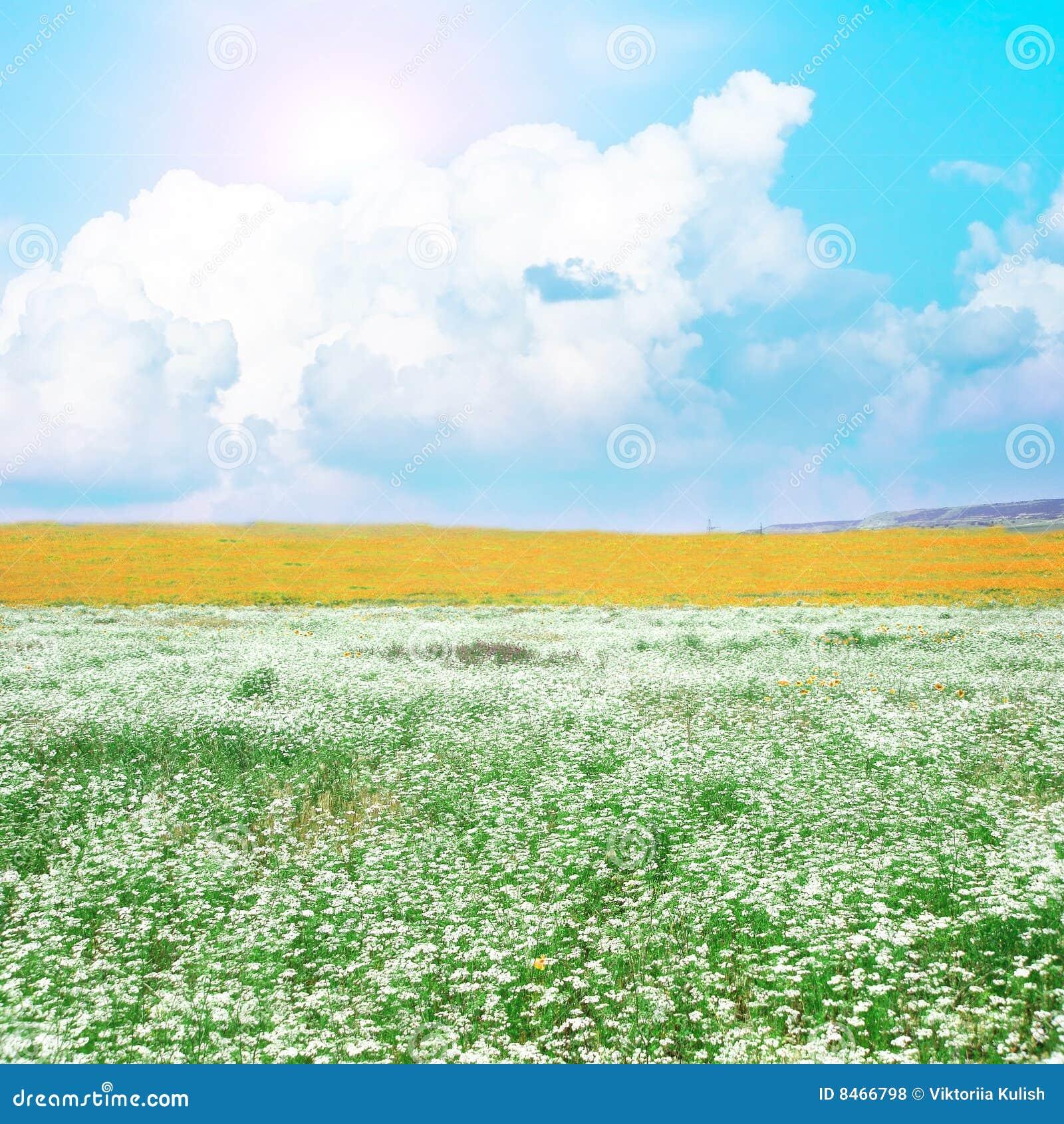 Blommar ängwhite
