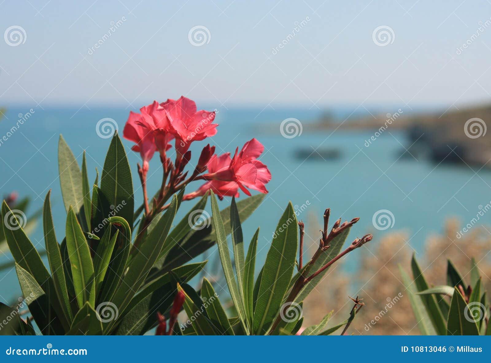 Blommar havet