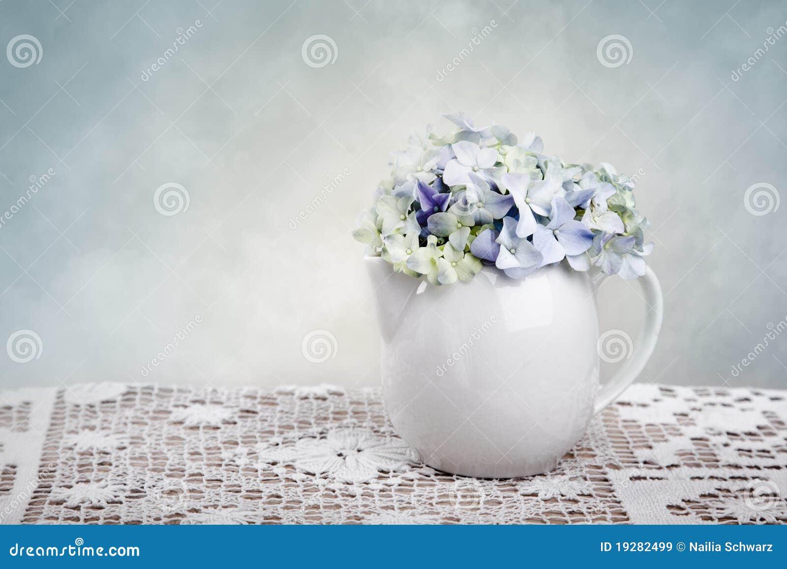 Blommar hortensia
