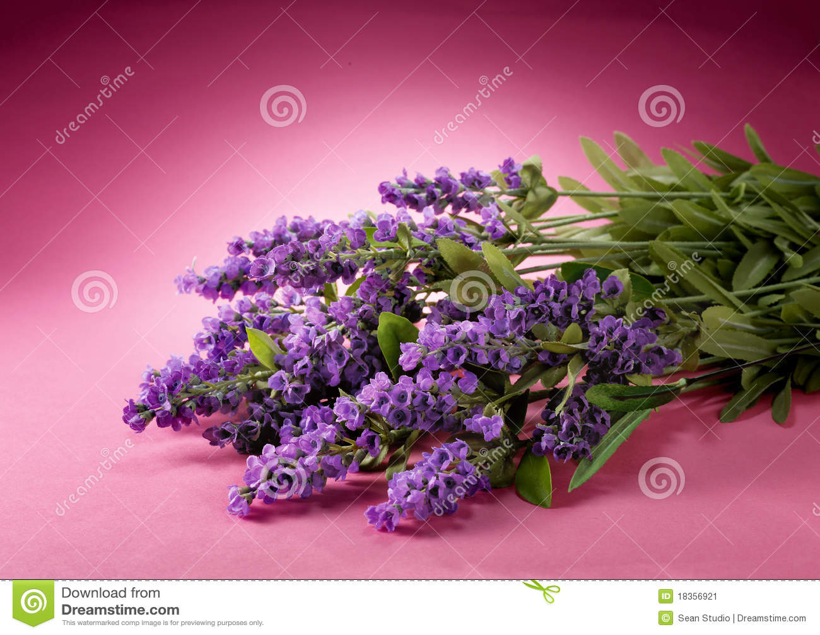 Blommar lavendel