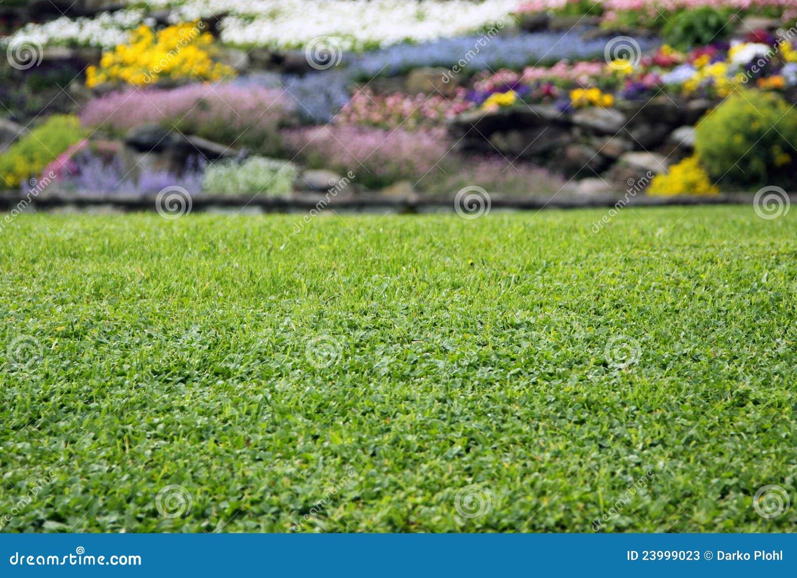 Blommar lawn