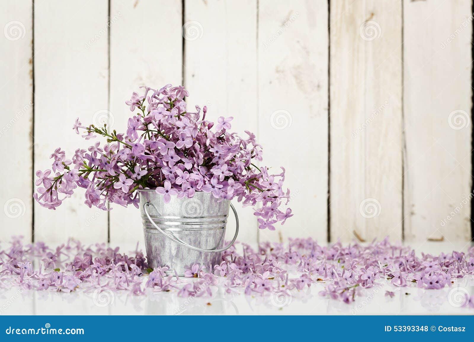 Blommar lilan