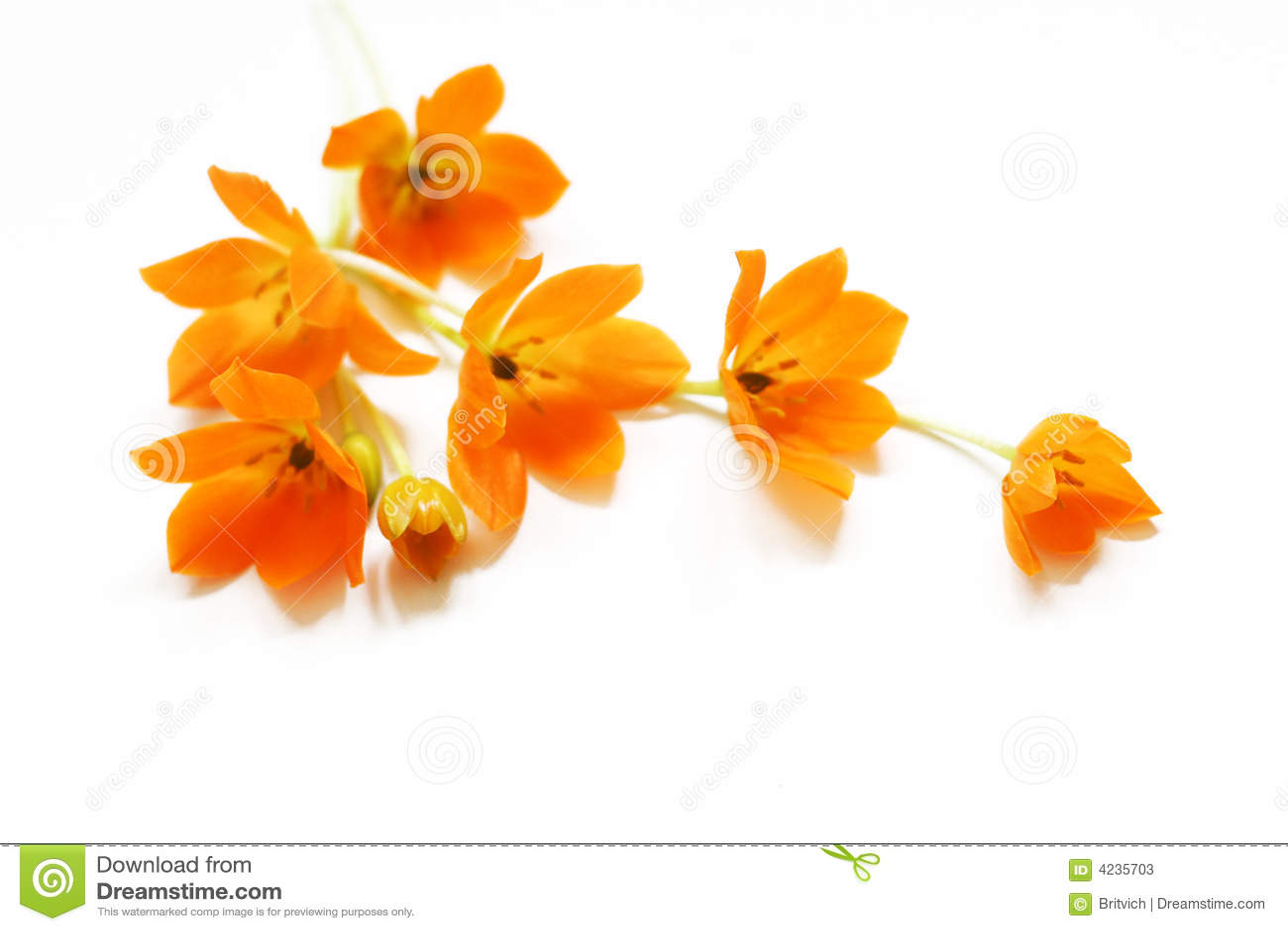 Blommar liten yellow