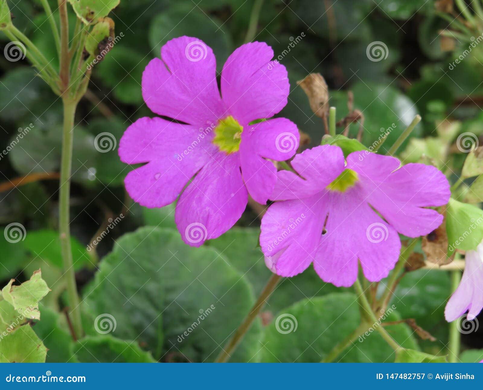 Blommar trevligt