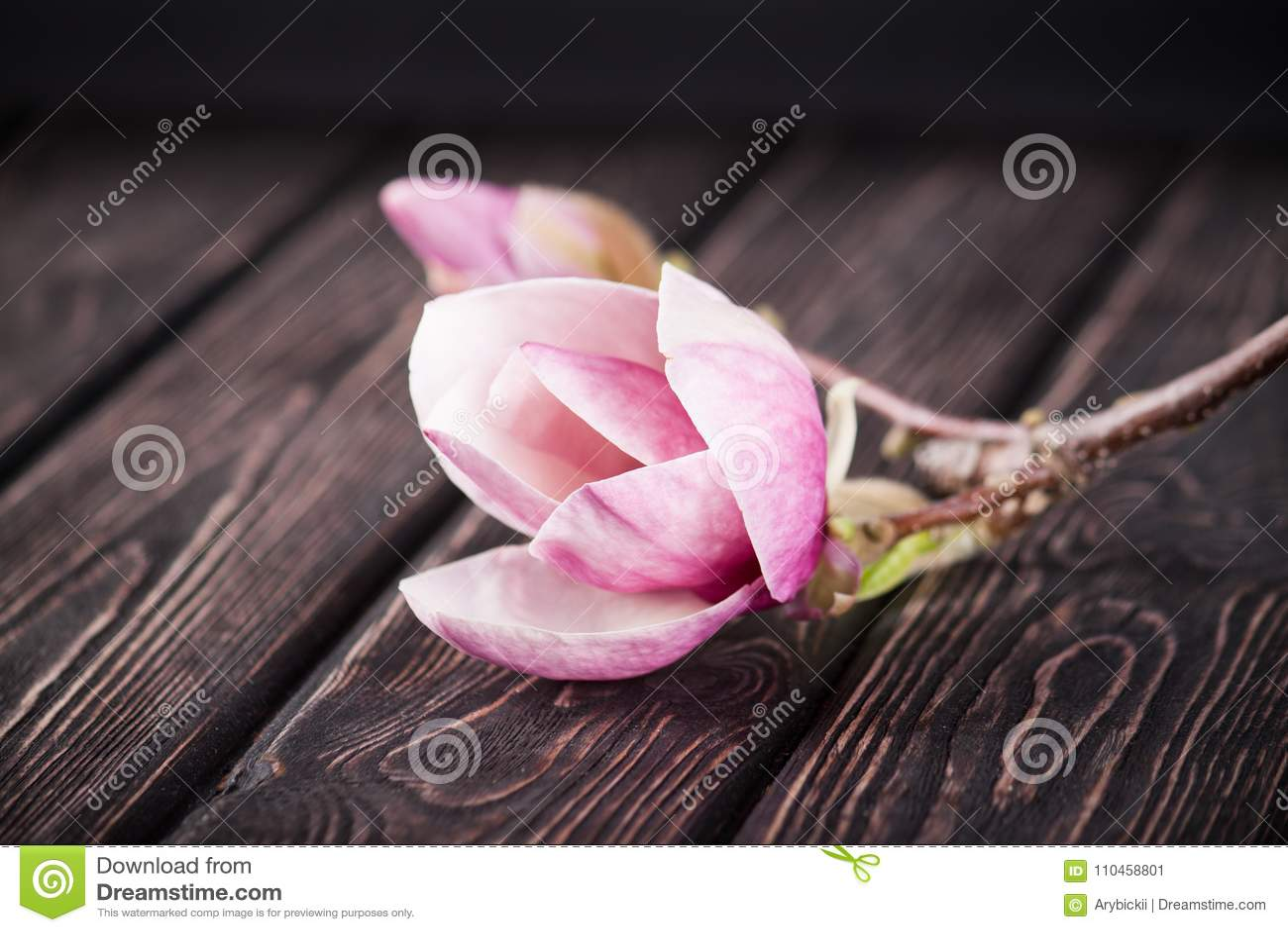 Blommarosa färgmagnolia