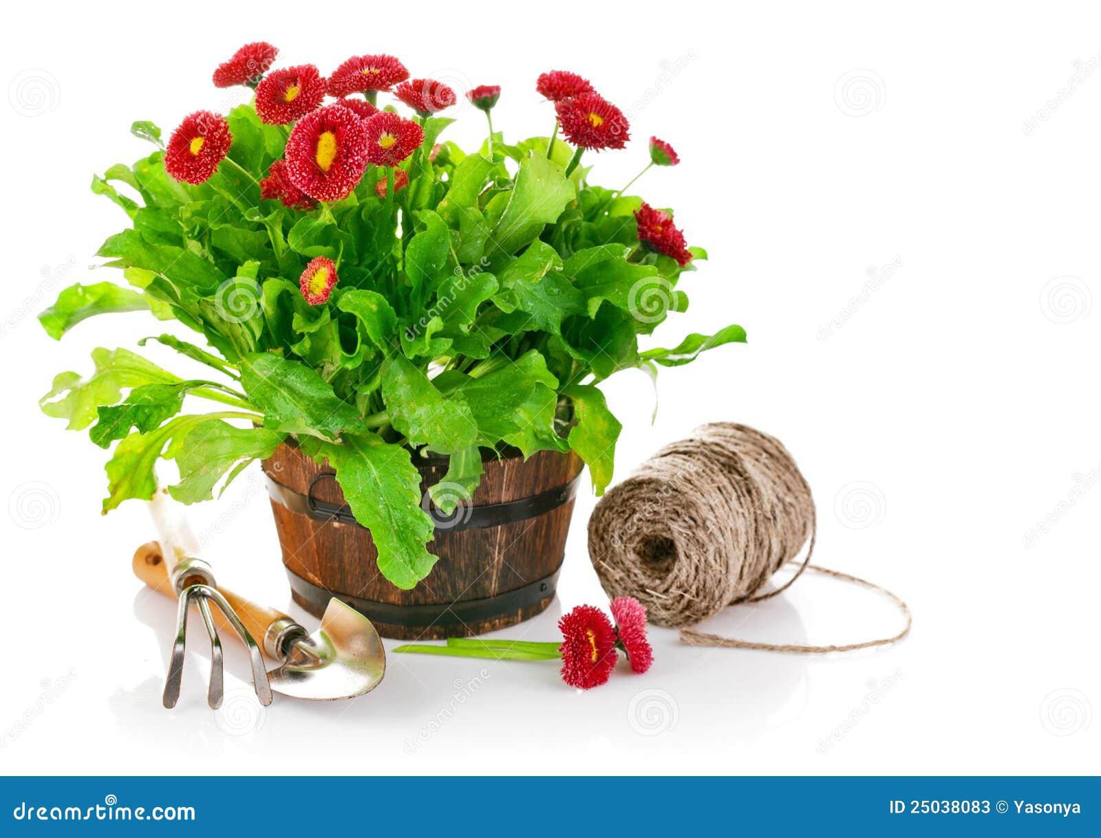 Blommas hjälpmedel för kruka för busketusenskönaträdgård