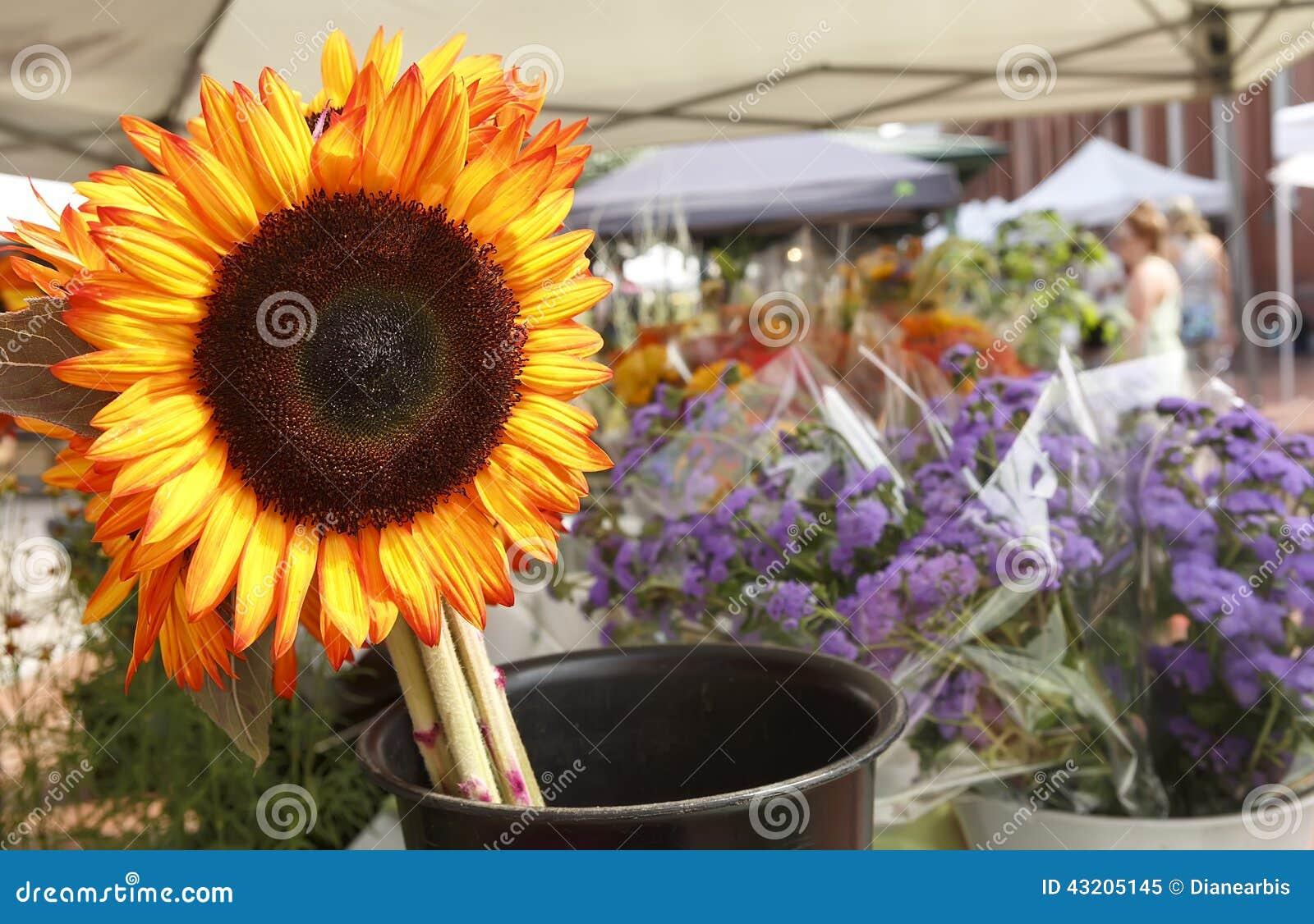 Download Blommaskärm fotografering för bildbyråer. Bild av säsongsbetonat - 43205145