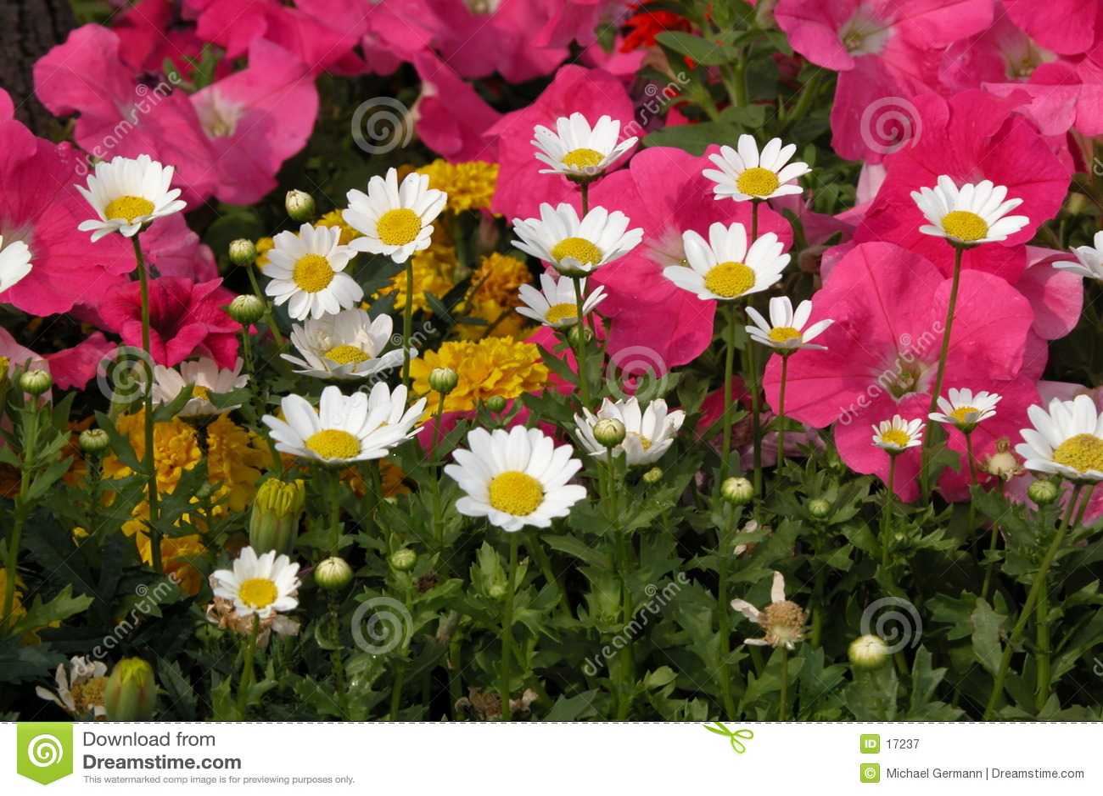 Blommaträdgård