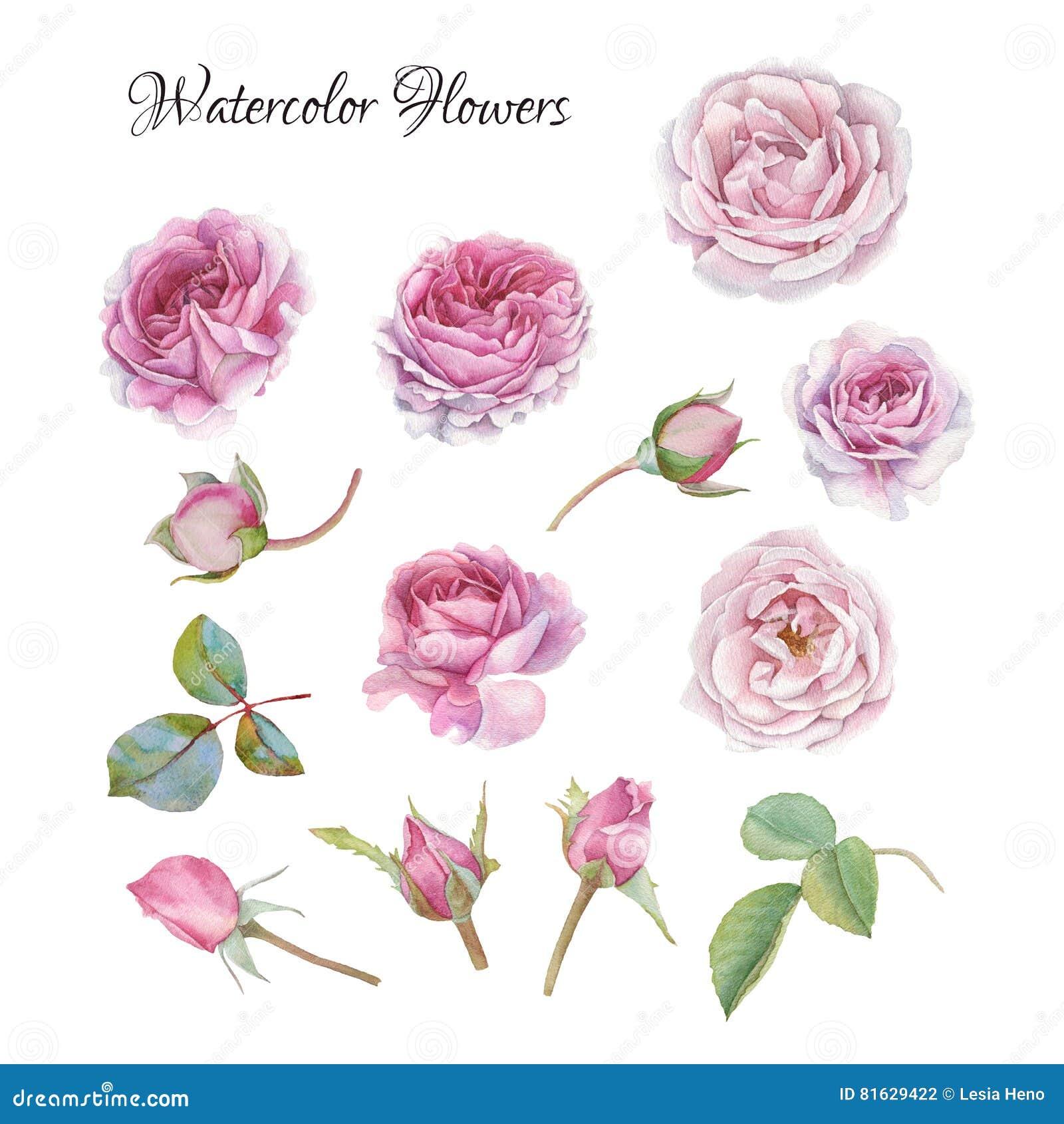 Blommauppsättning av vattenfärgrosor och sidor