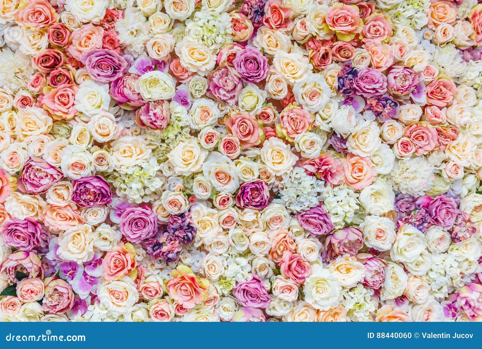 Blommaväggbakgrund med att förbluffa röda och vita rosor som gifta sig garnering,