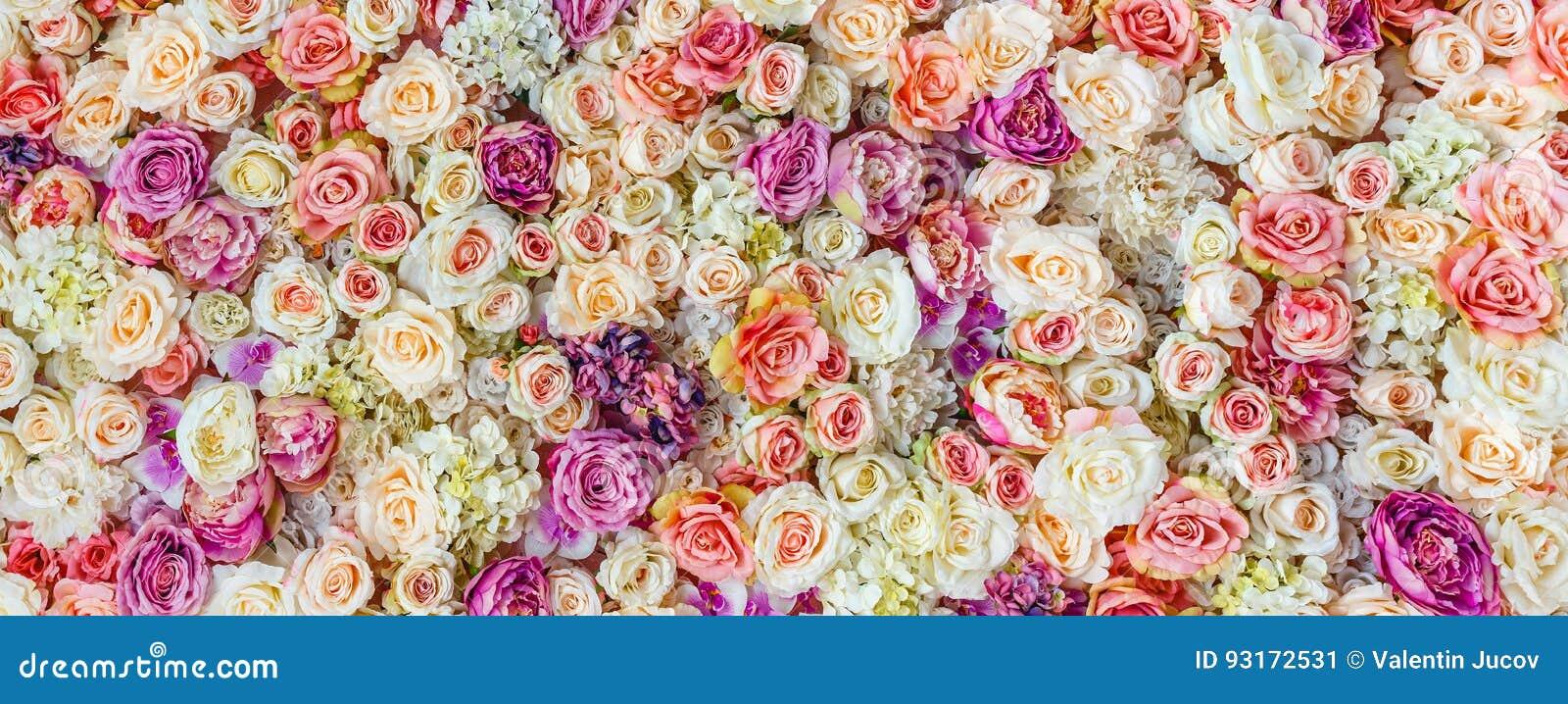 Blommaväggbakgrund med att förbluffa röda och vita rosor som gifta sig garnering