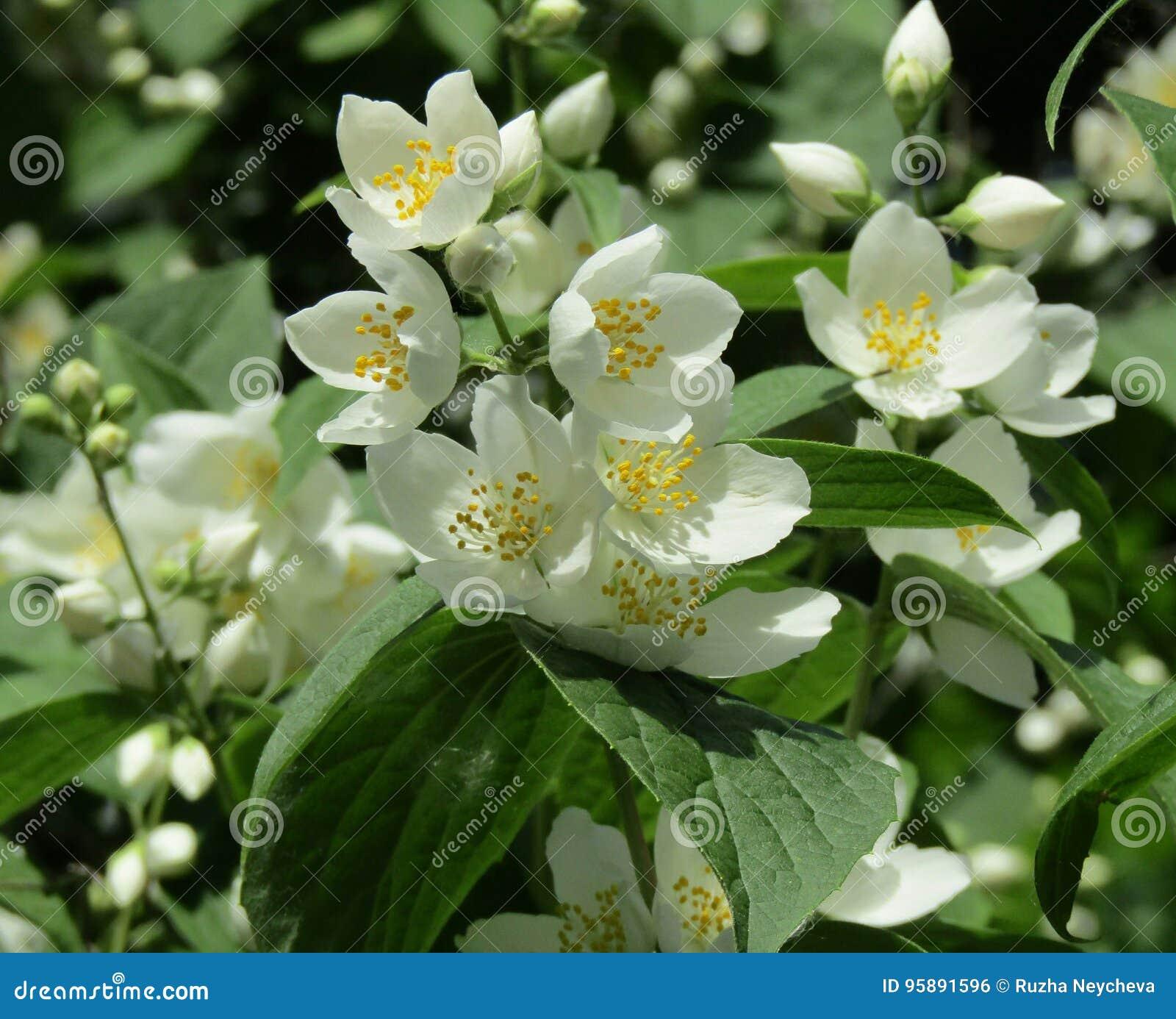 Blommor arbeta i trädgården white