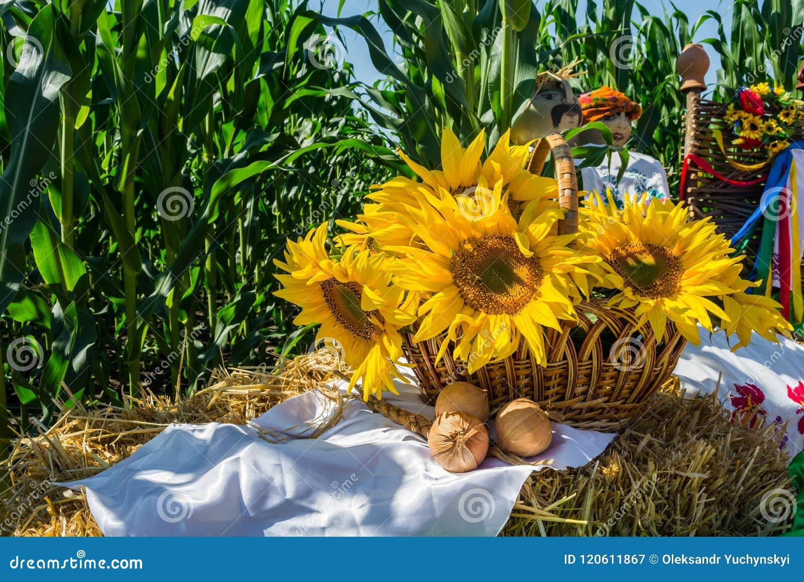 Blommor av en solros i en korg, på en sugrörbal, mot en bakgrund av ett fält av havre