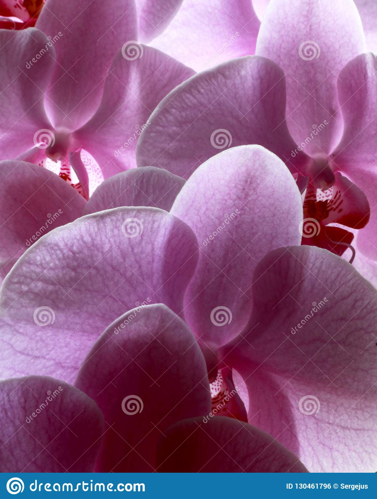 Blommor av förälskelse
