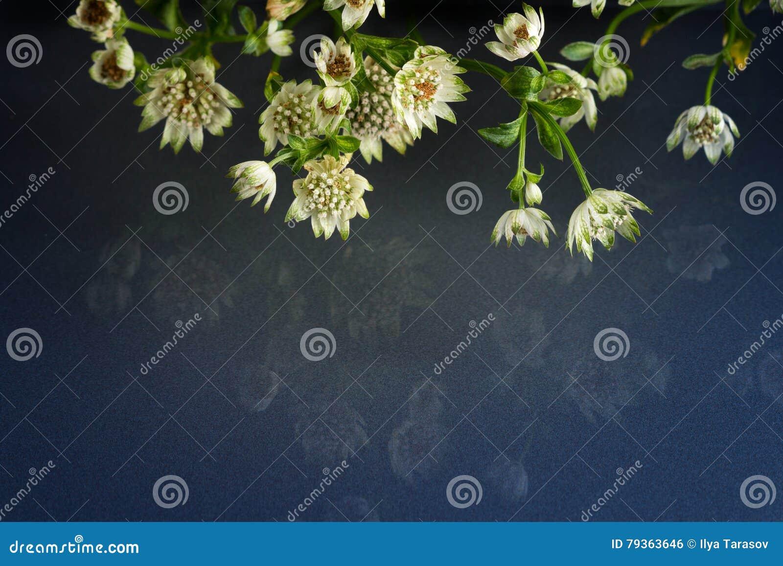 Blommor av fantastisk skönhet för djurliv