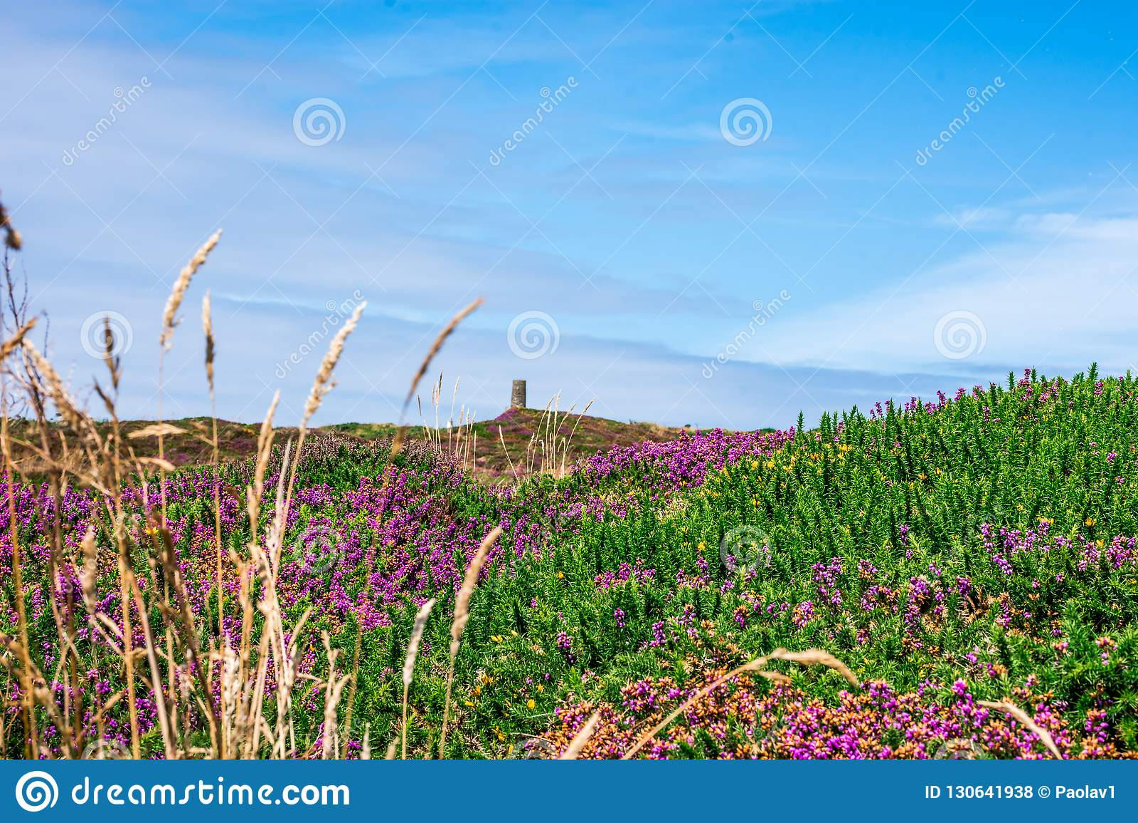 Blommor beskådar i Wheal Coates