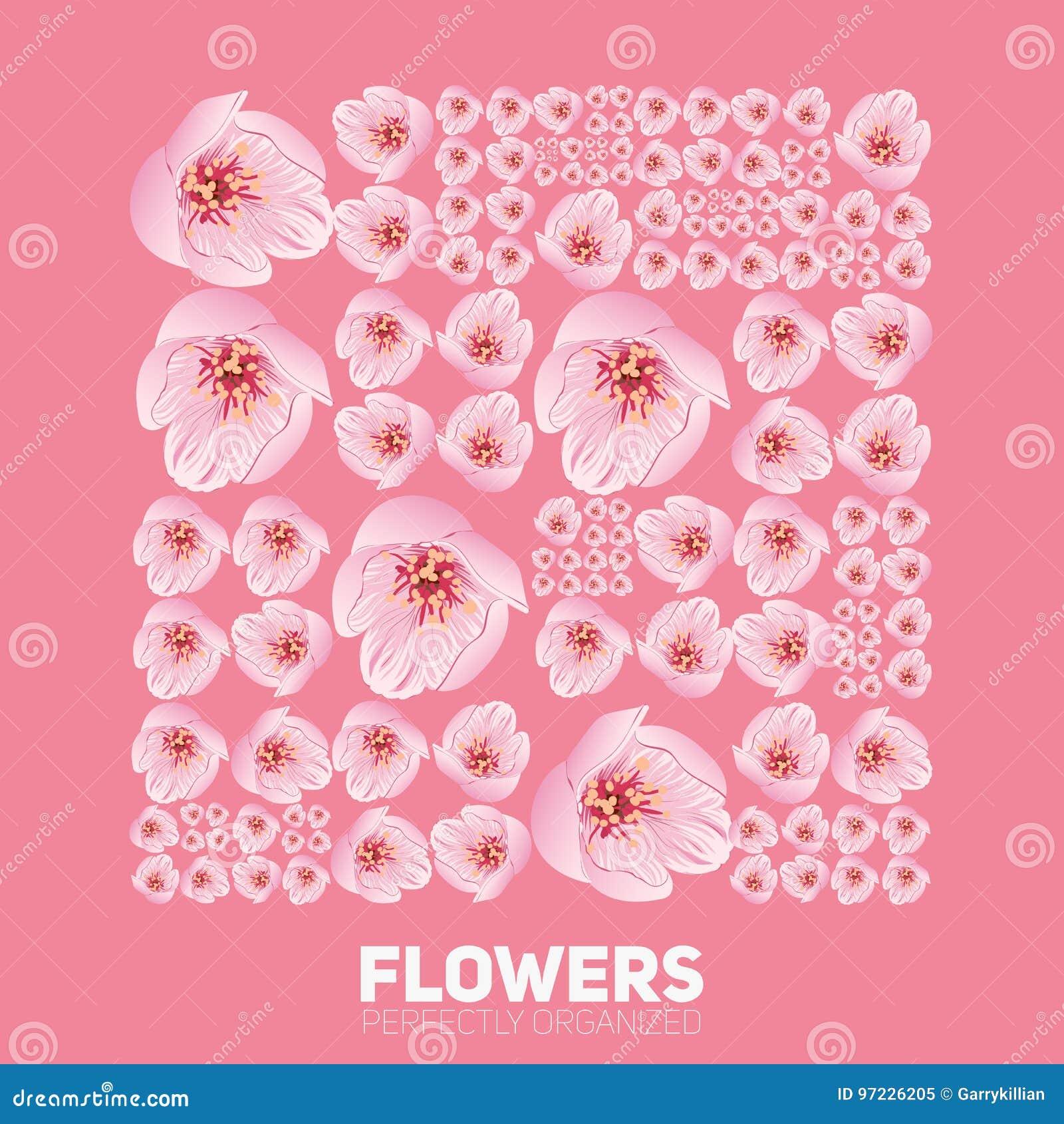 Blommor för körsbärsröd blomning som perfekt organiseras Vektorsakura blommor som trevligt organiseras av rastret Begreppsmässigt