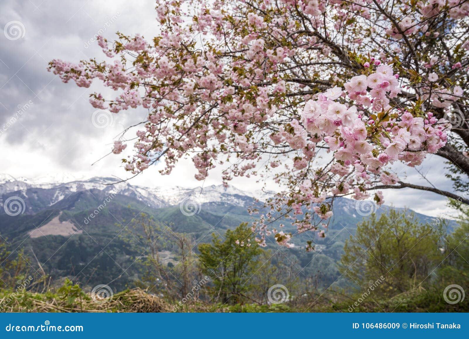 Blommor framme av berget