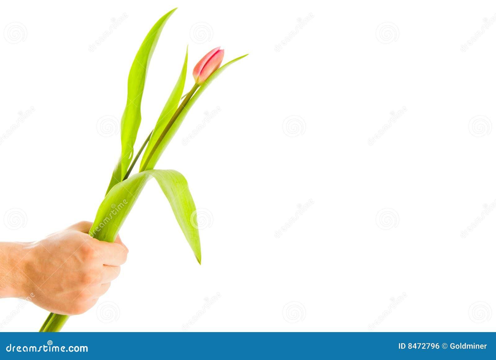 Blommor hand isolerad manwhite