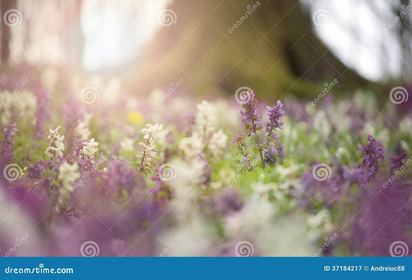 Blommor i blom i en skog i vår
