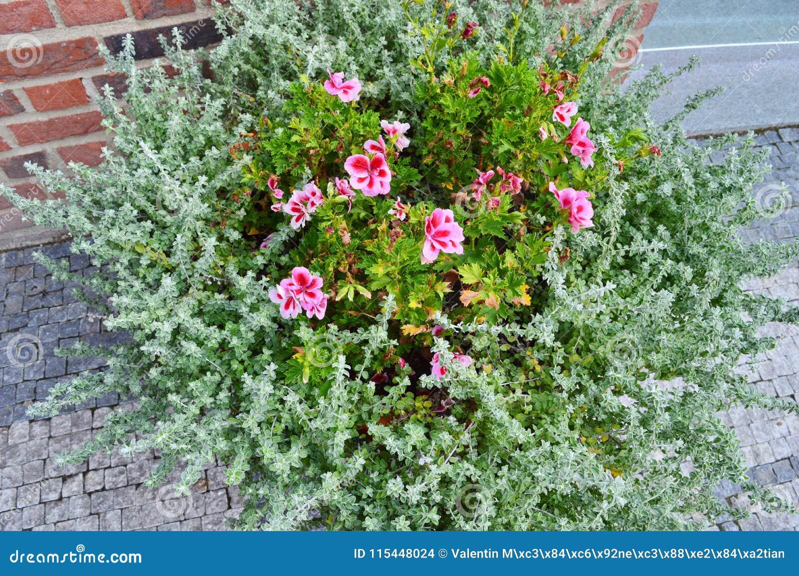 Blommor i en buske på gatan
