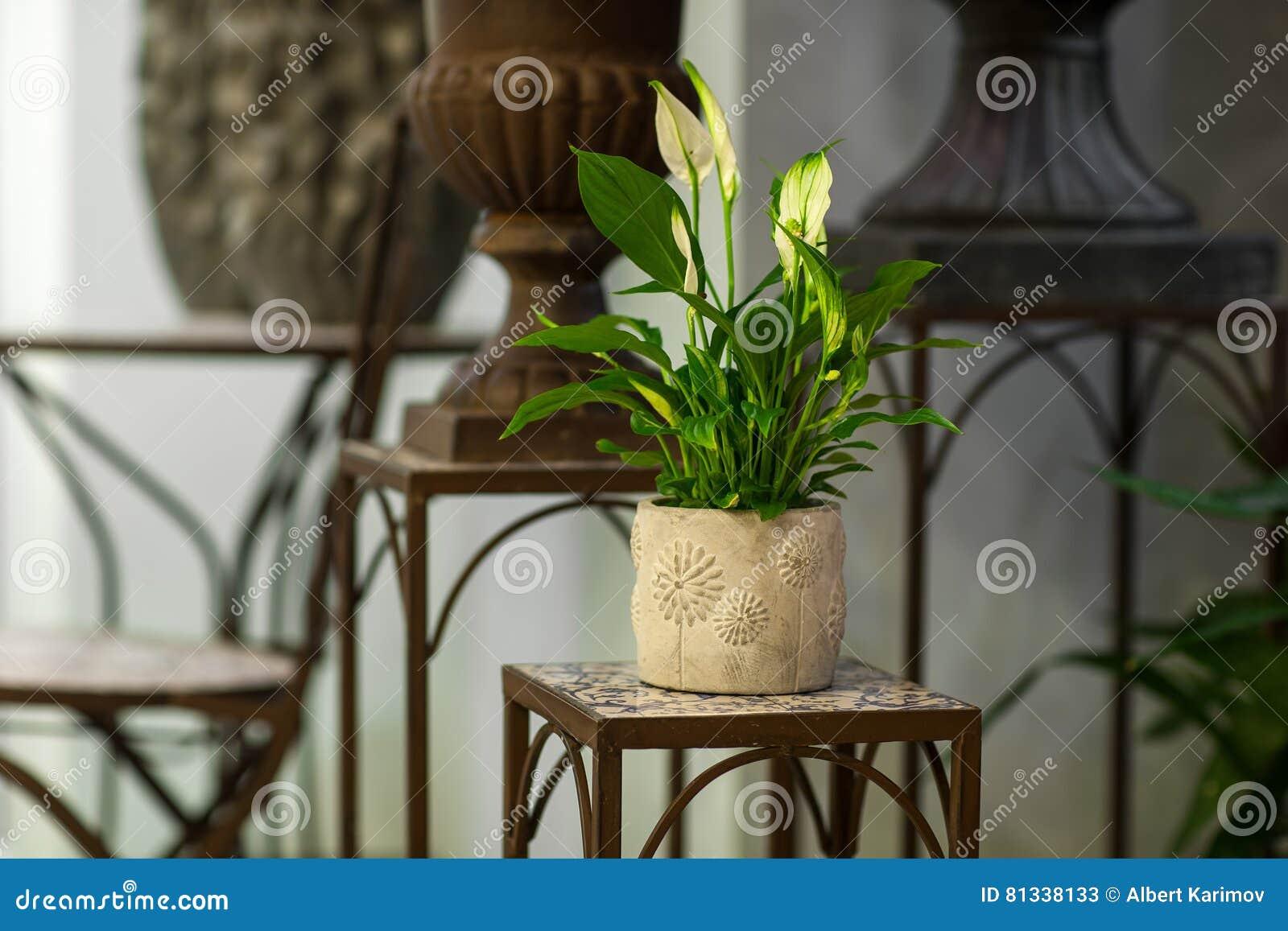 ställning för blommor
