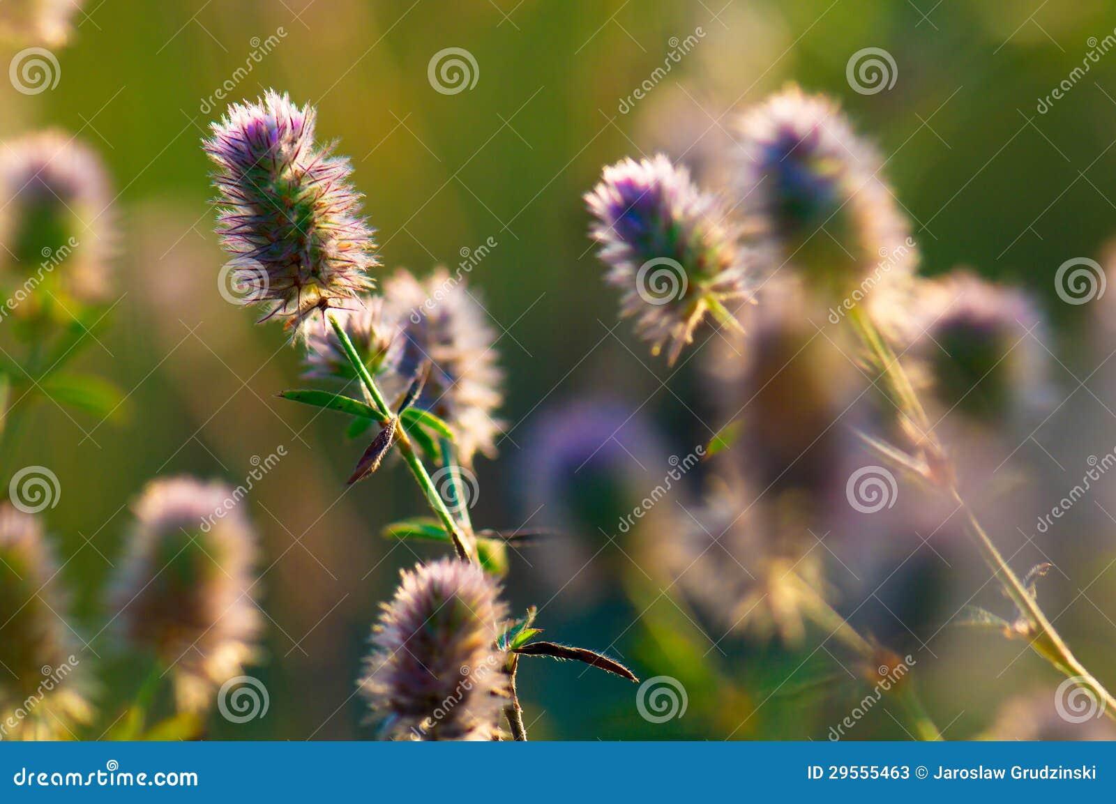 Blommor i gräset
