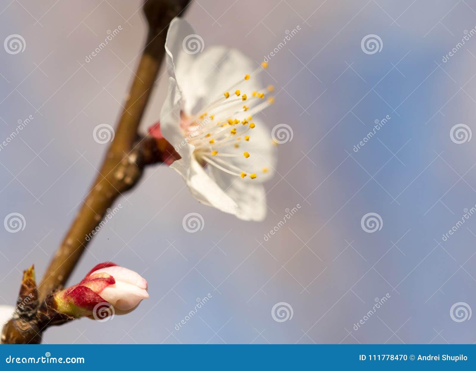 Blommor på trädet mot den blåa himlen