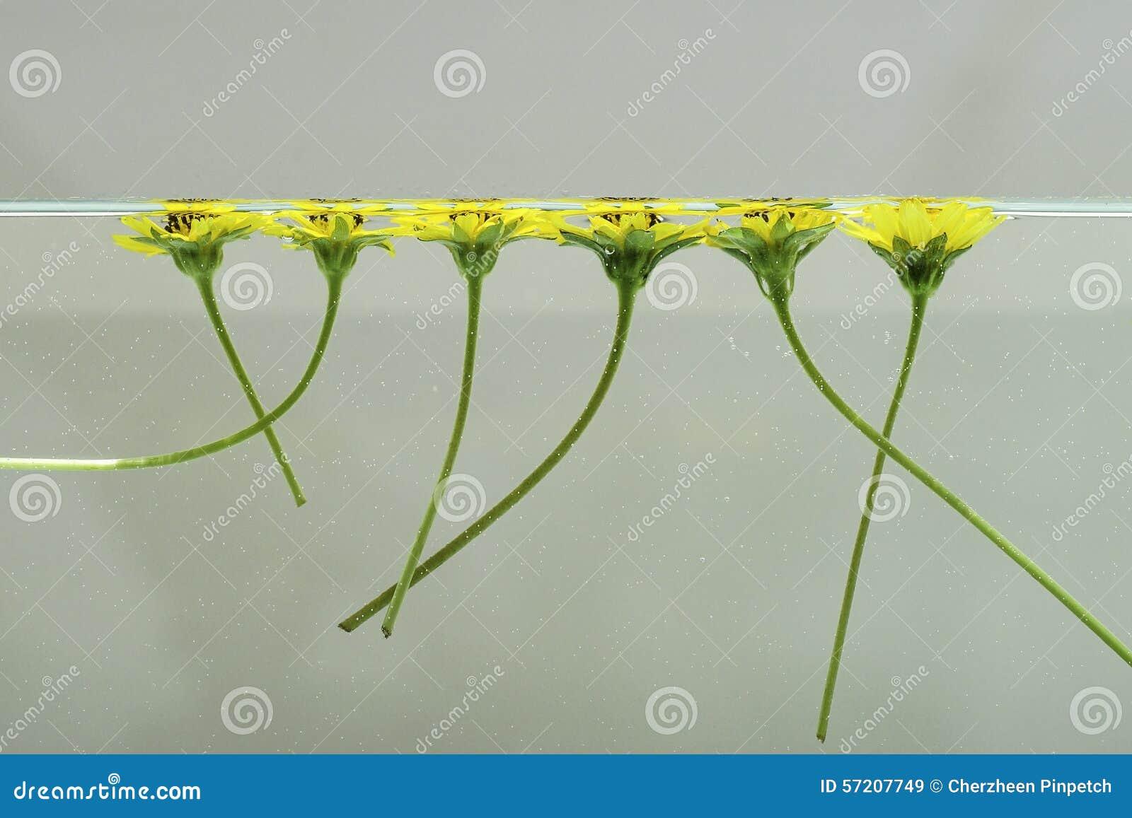 Blommor som svävar på vatten 1