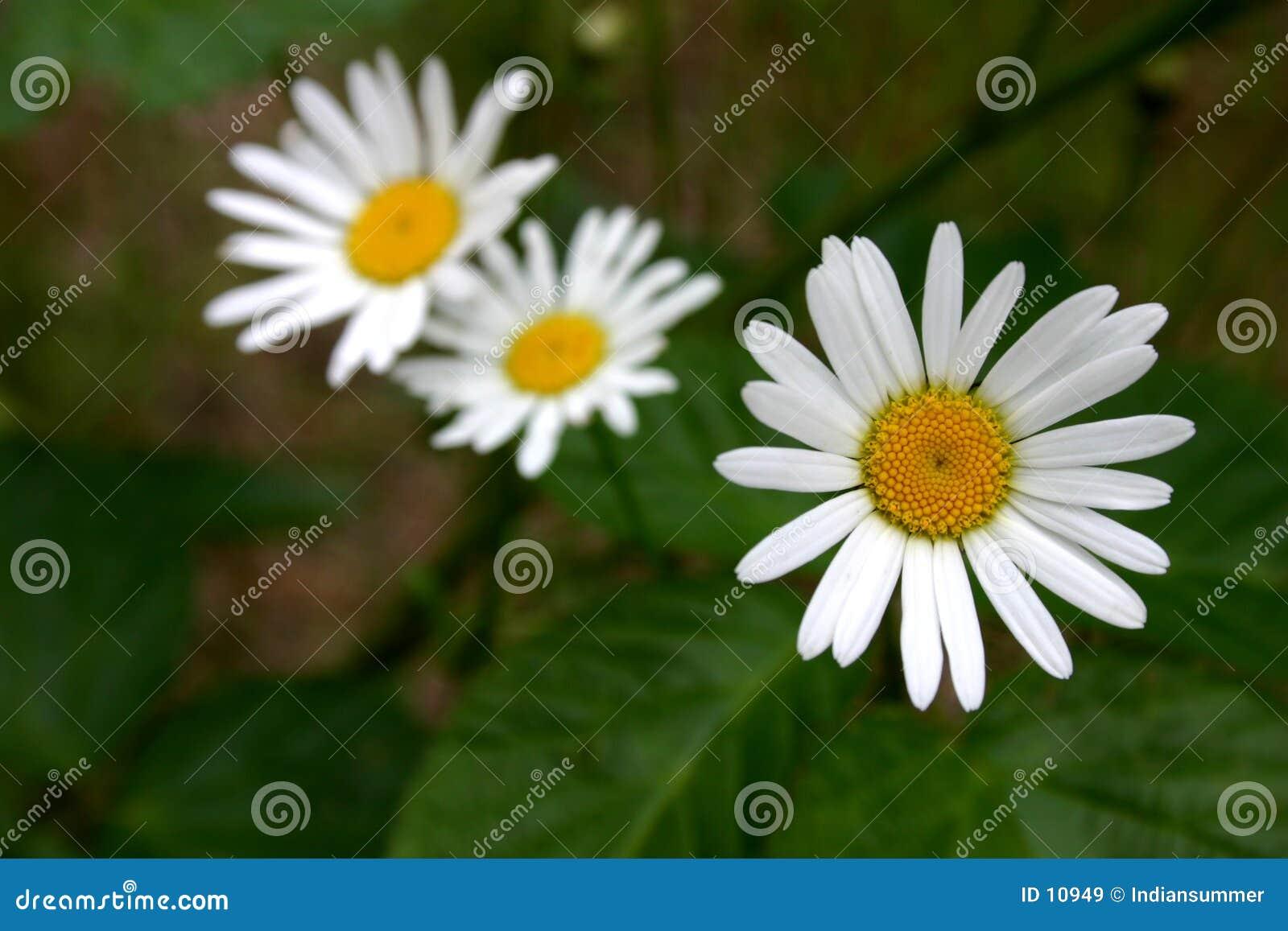 Blommor tre