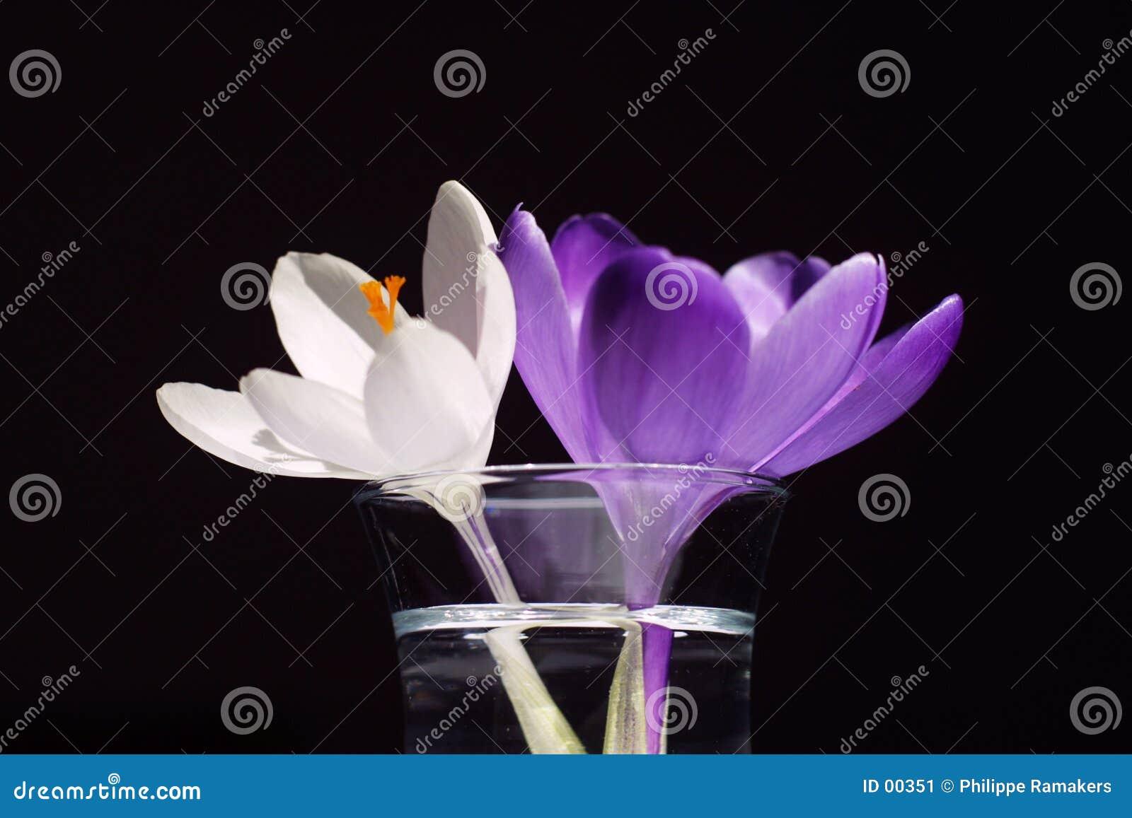 Blommor två