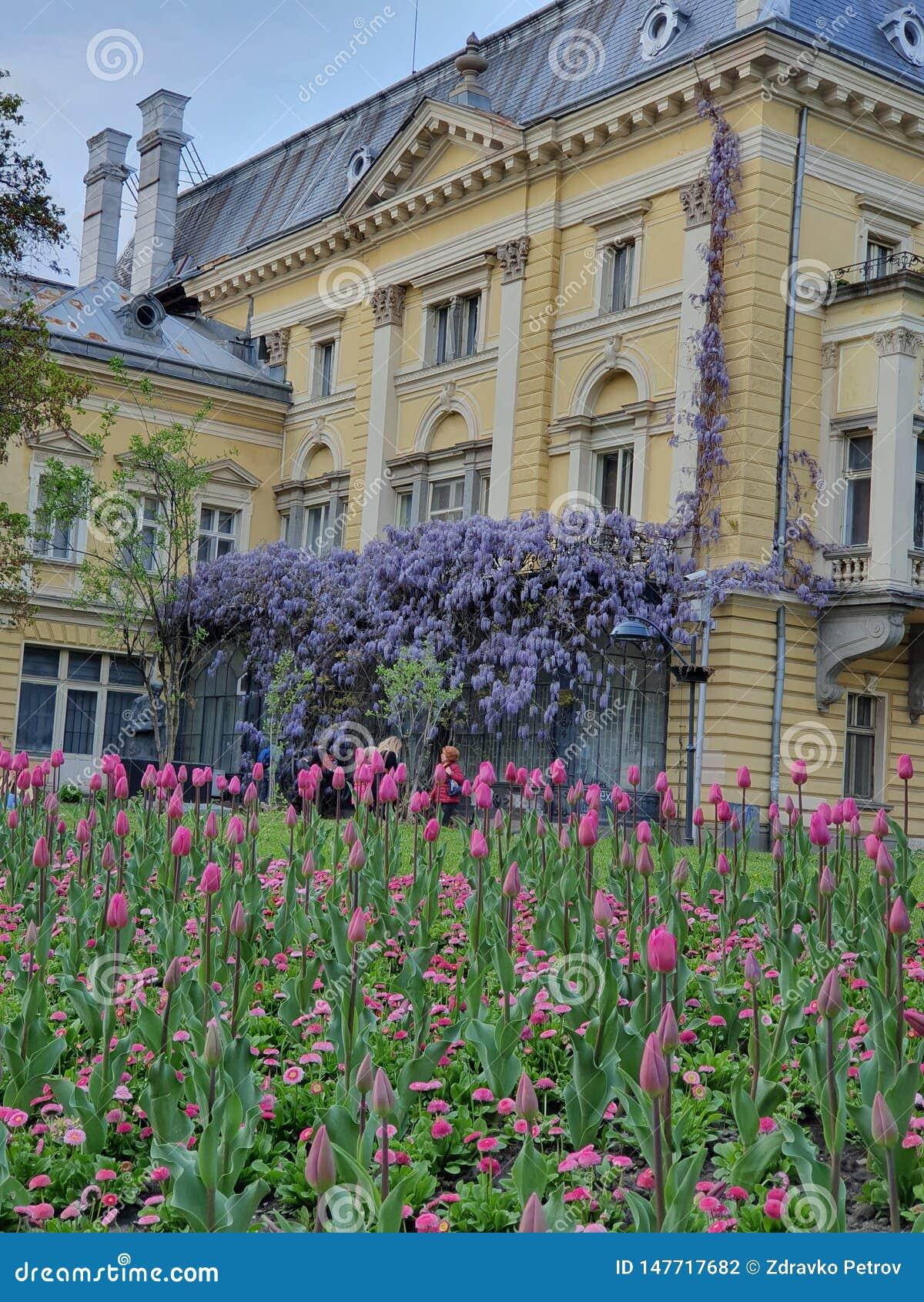 Blommorna och byggnaden