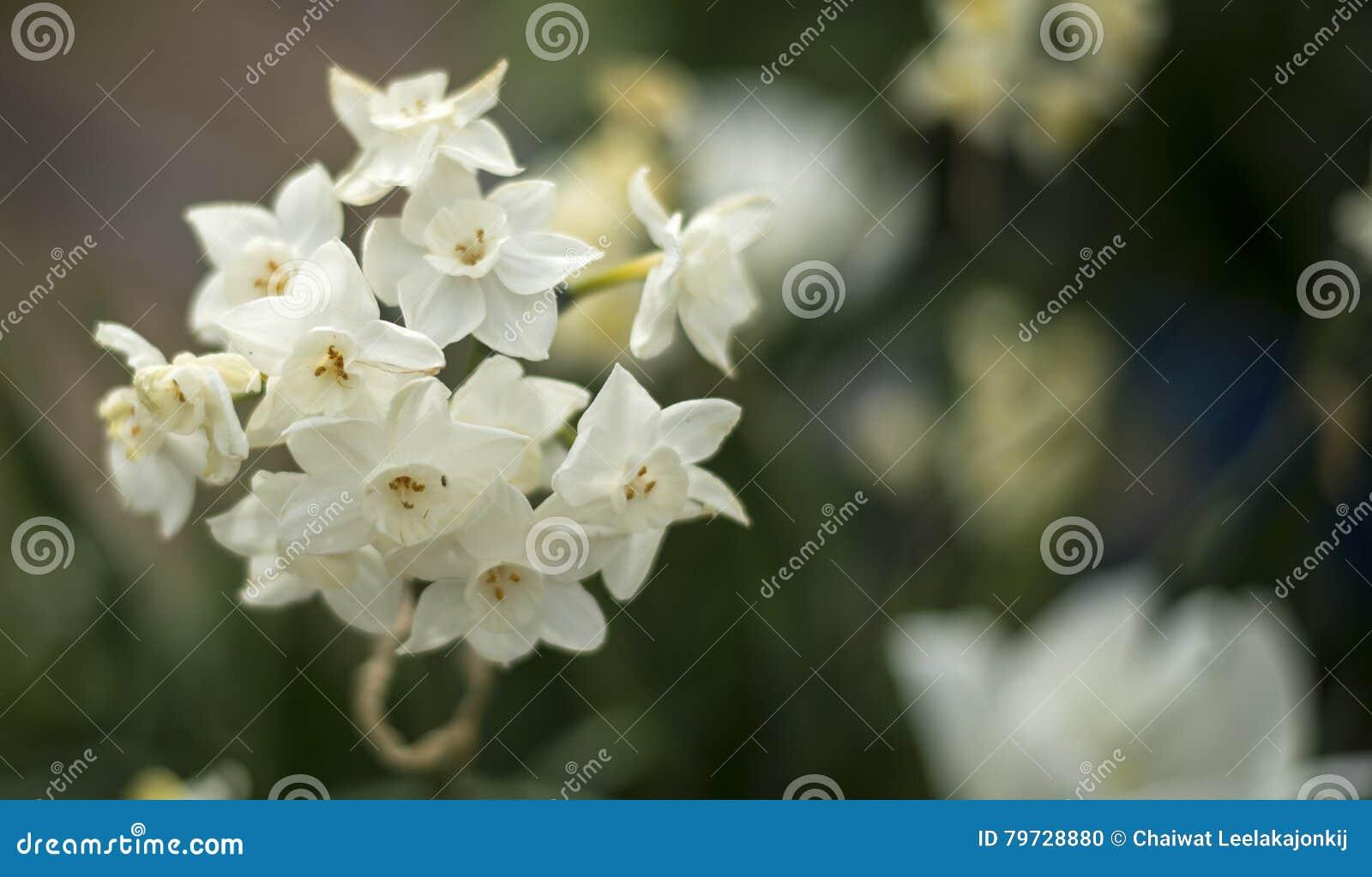 Blomning för vit blomma