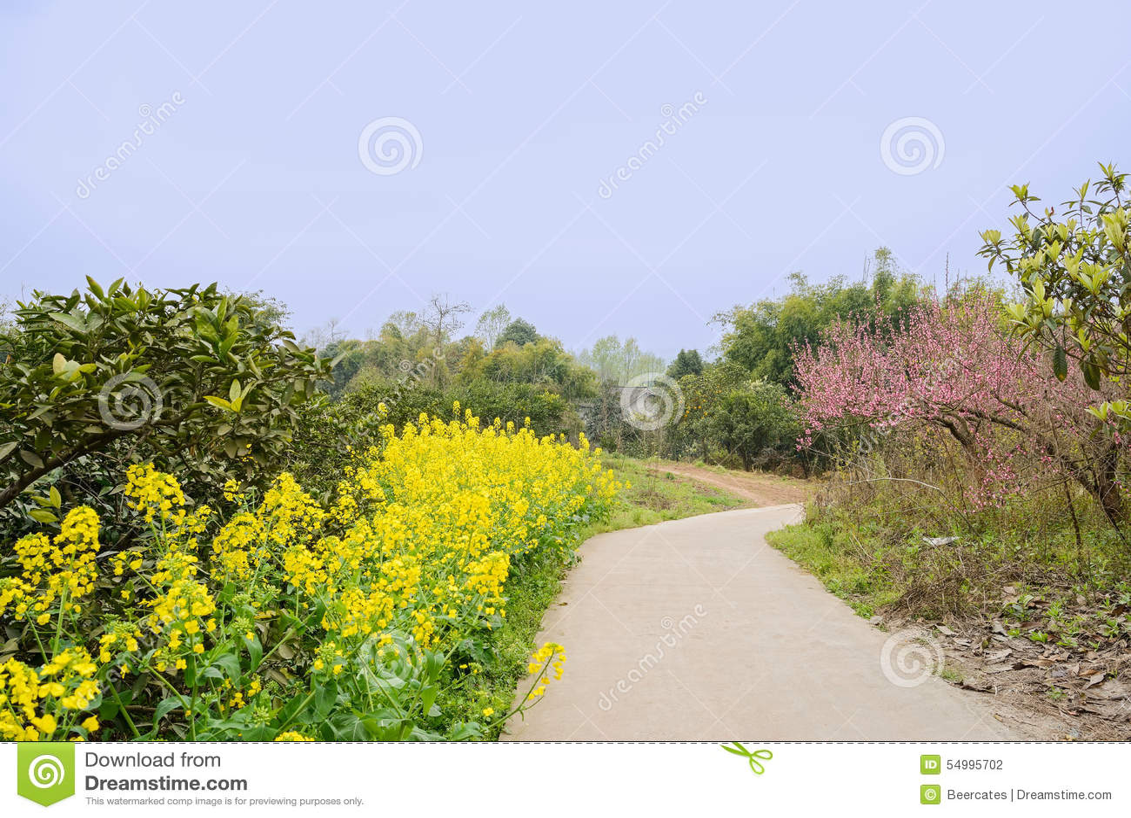 Blomningcountryroad i solig vår
