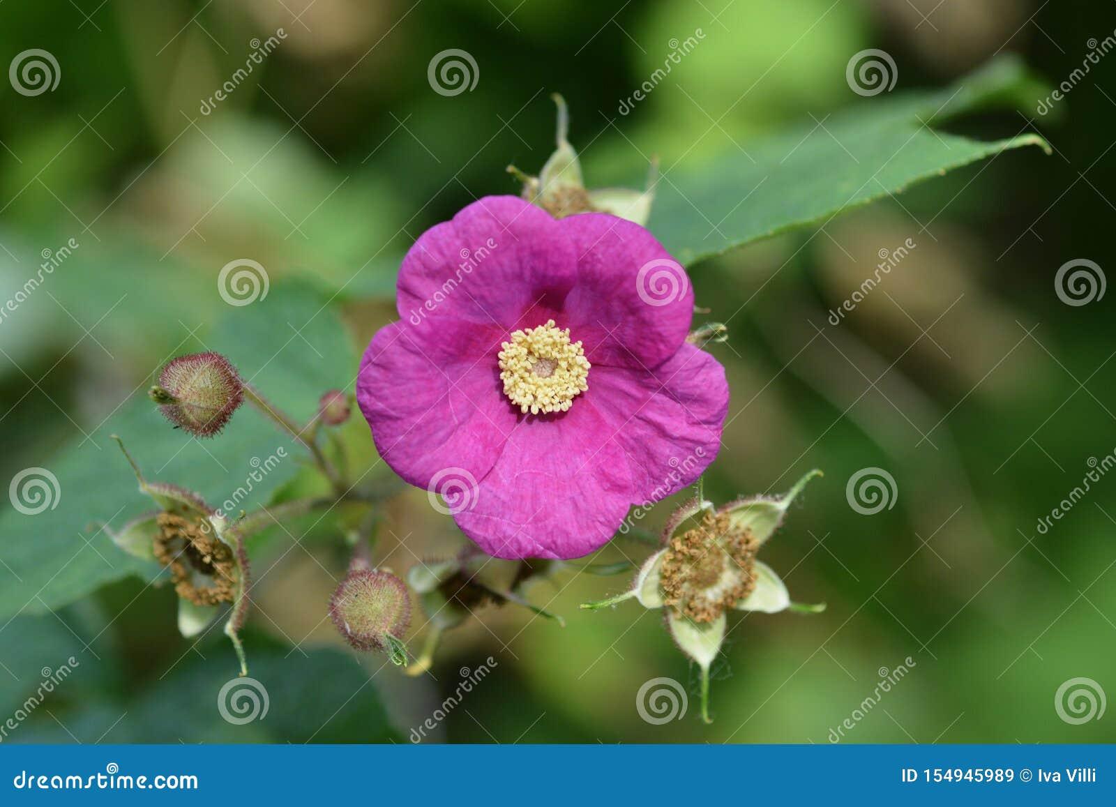 Blomninghallon