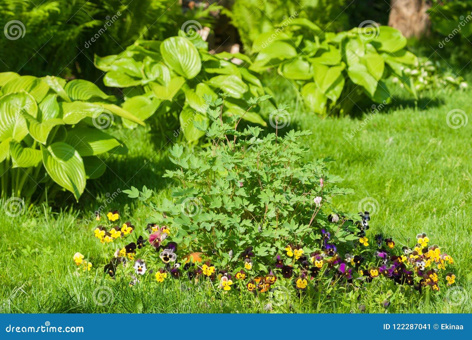 Blomsterrabatten
