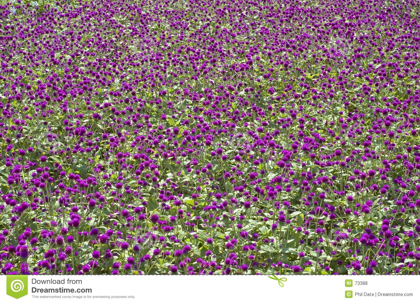 Blomsterrabattpurple