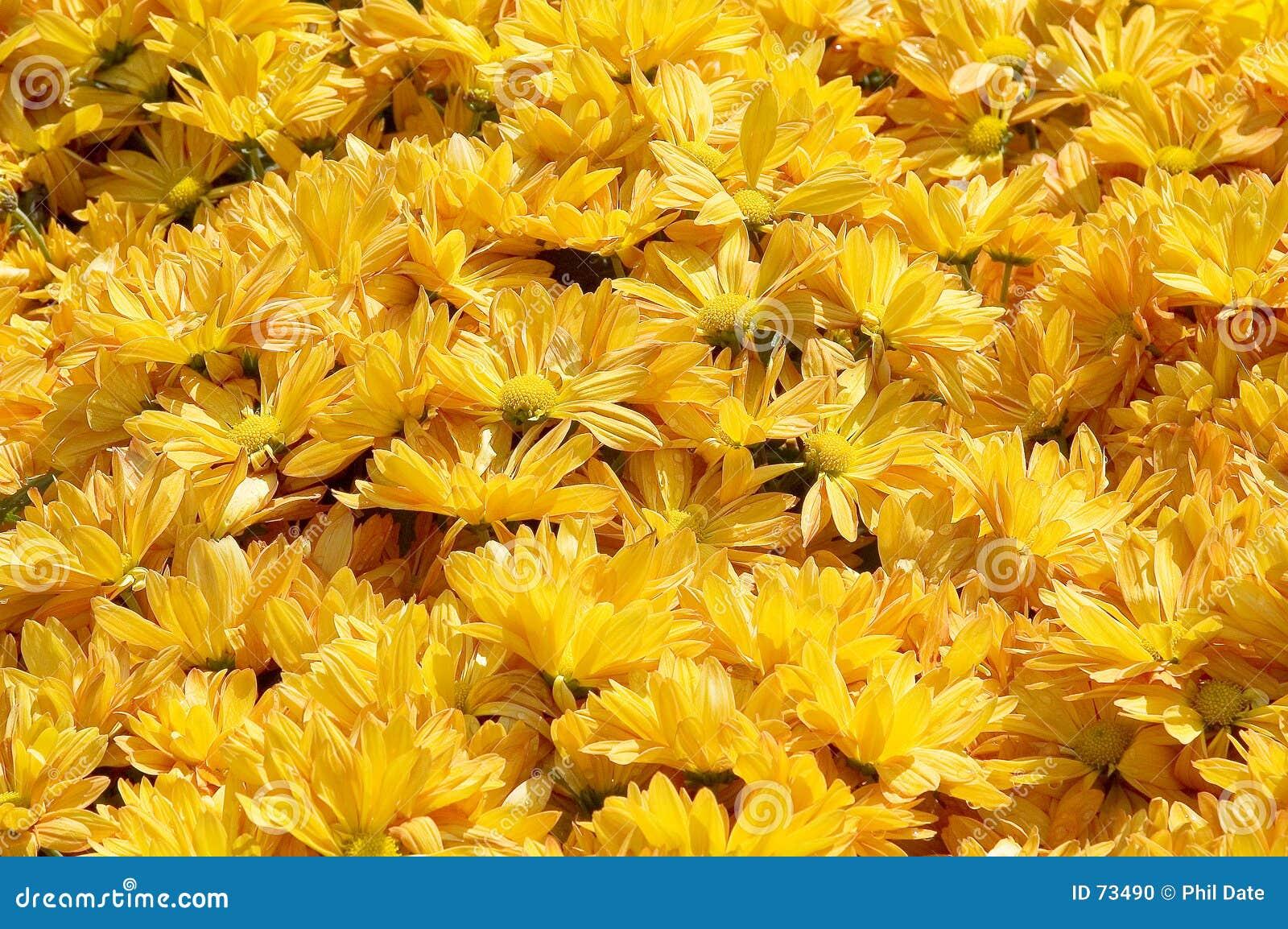 Blomsterrabattyellow