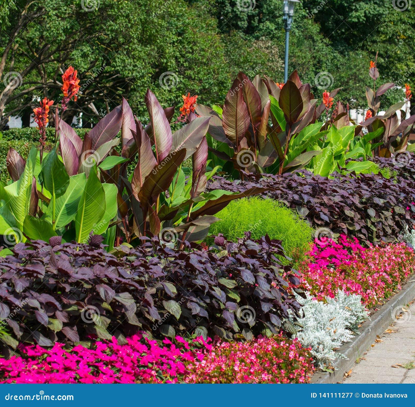Blomstra färgrika blomsterrabatter i sommarstad parkera i Riga