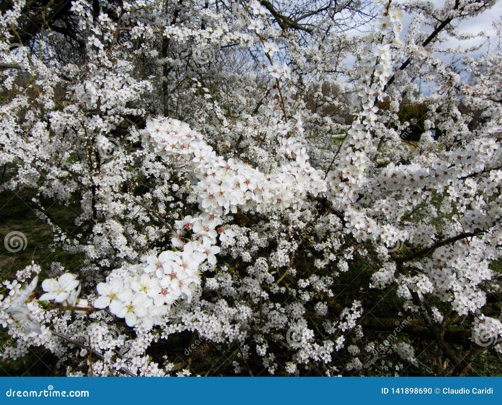 Blomstra fjädertrees