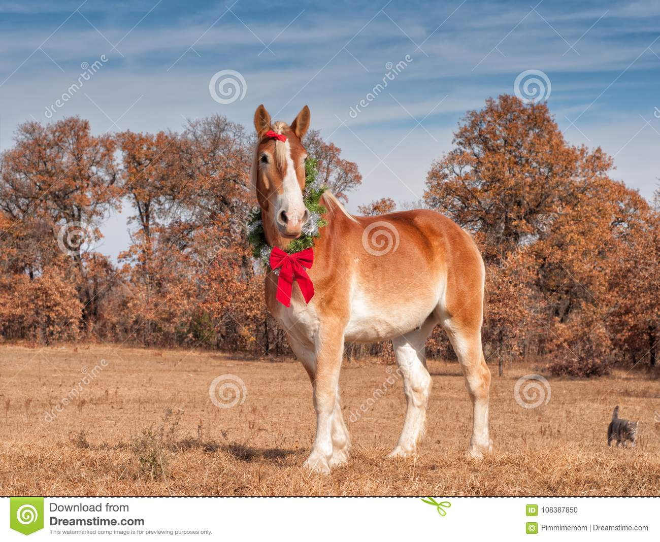 Blond Belgian Draft Horse Standing In Winter Pasture Wearing A